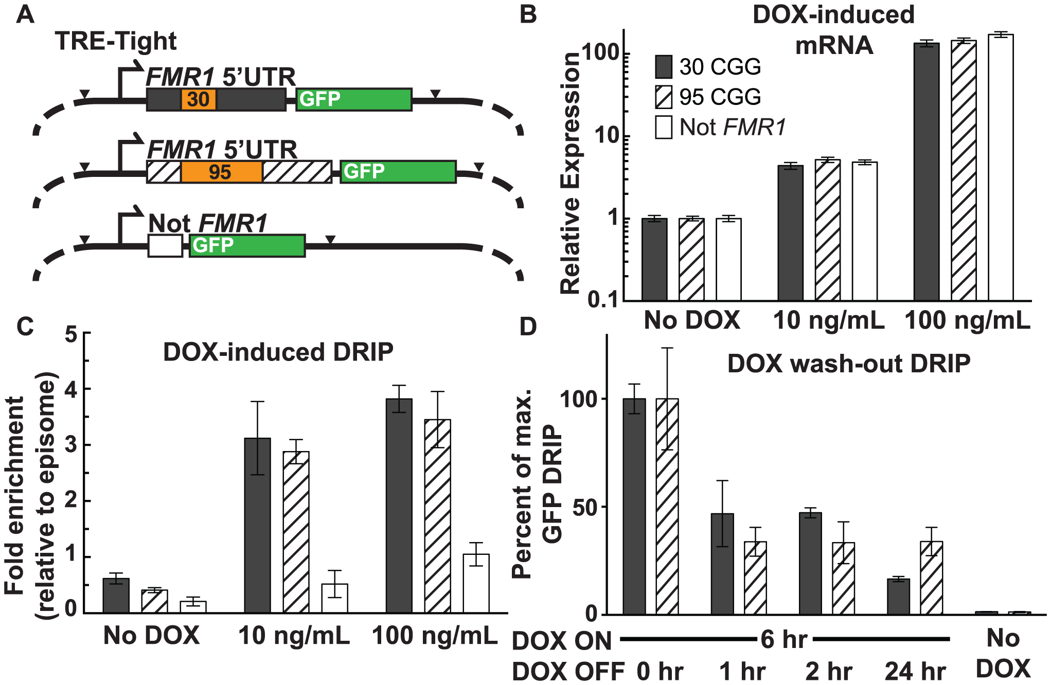 Effect of transcription and repeat length on <i>FMR1</i> R-loop formation.