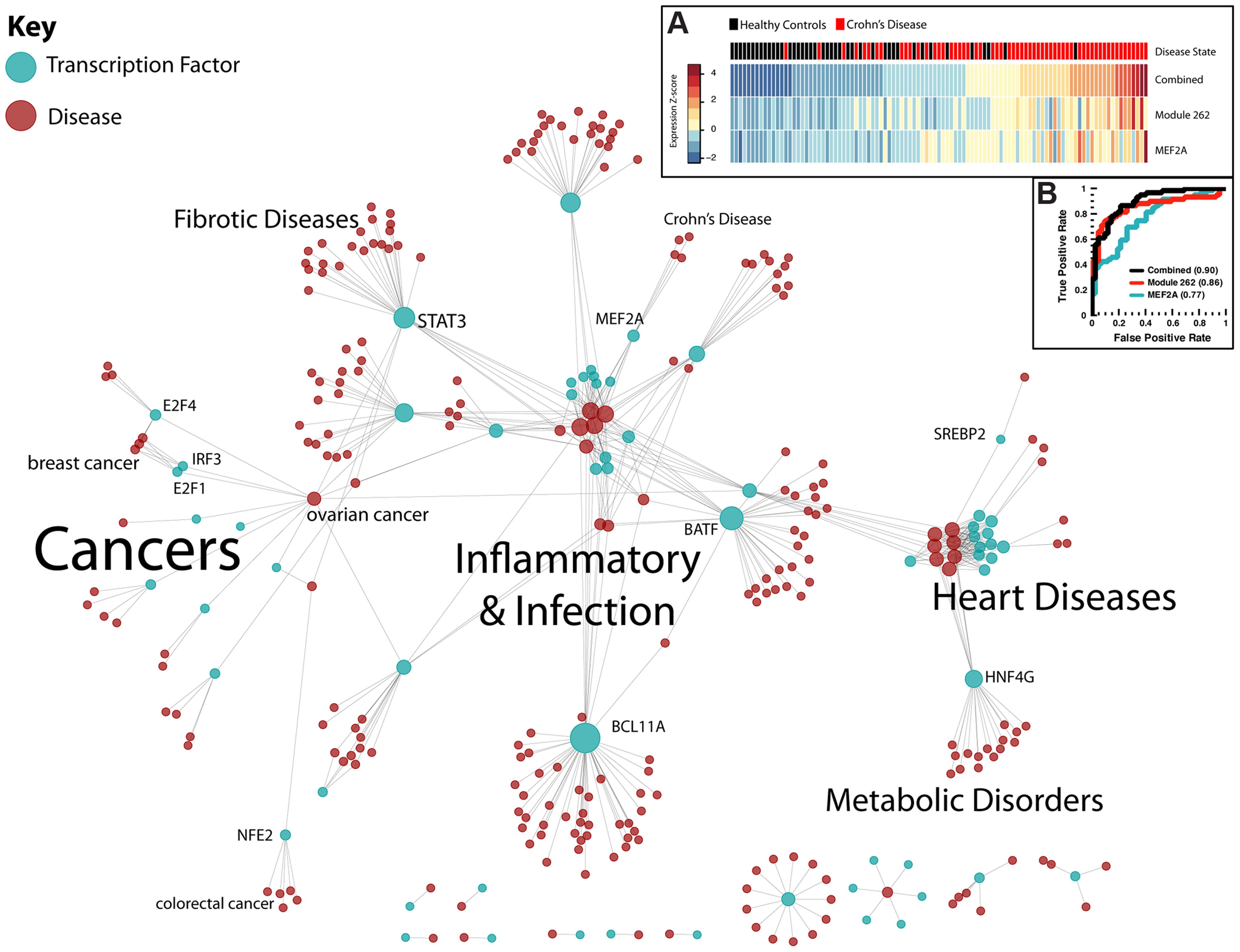 Regulatory network of human disease.