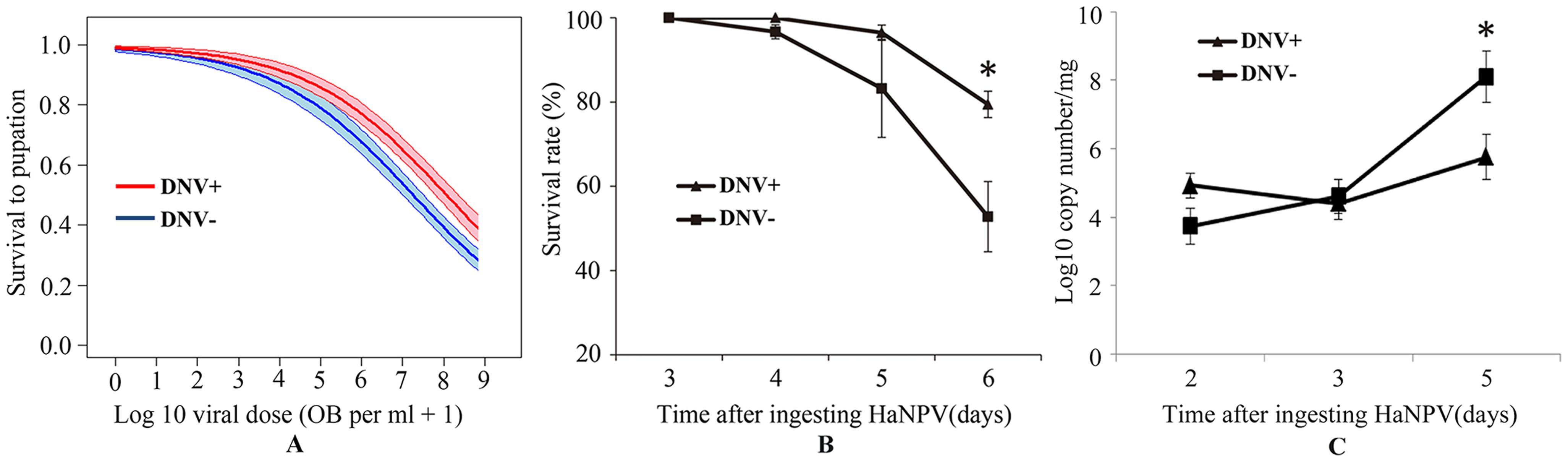 Relationship between the baculovirus HaNPV and the densovirus HaDNV-1 in cotton bollworm larvae.