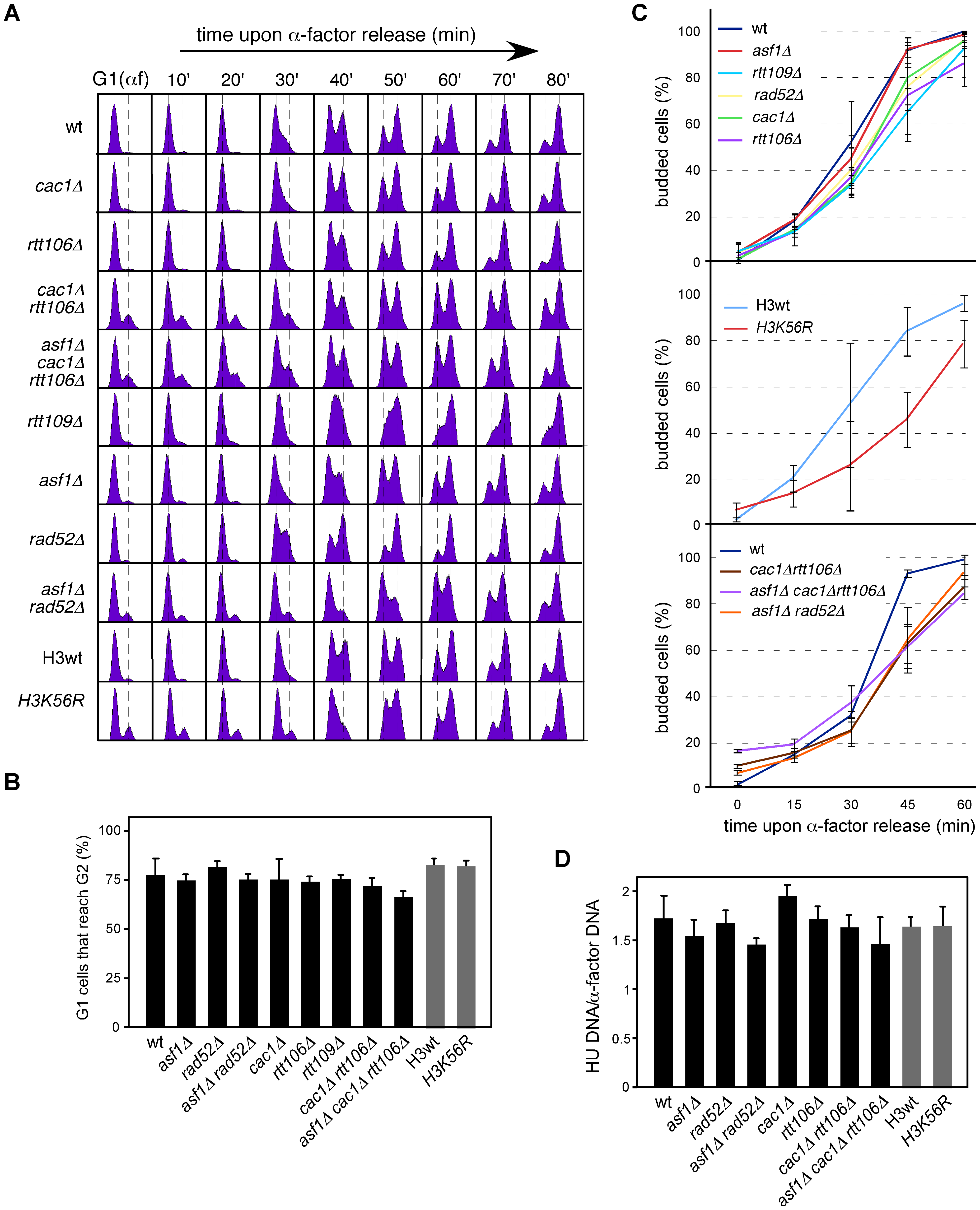 Chromatin assembly mutants are not affected in <i>ARS305</i> replication firing.