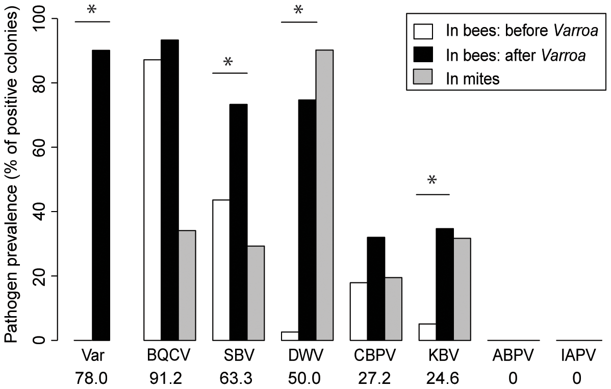 Honeybee virus prevalence across the <i>Varroa</i> front of infestation.