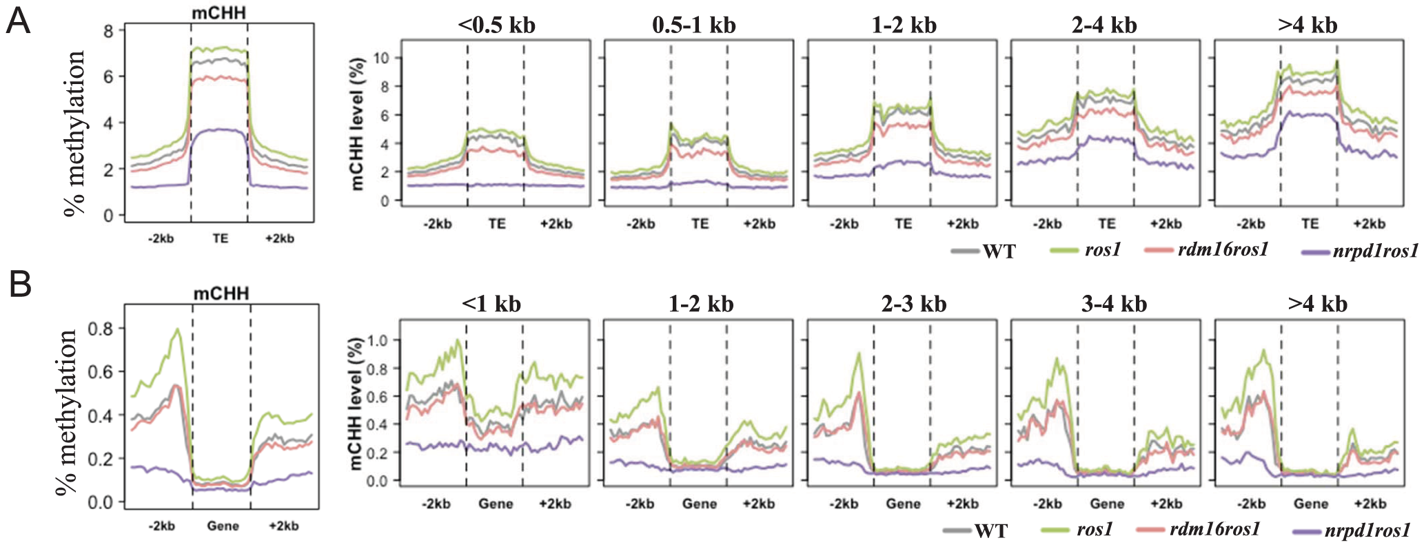 Average CHH methylation levels in transposable elements (TEs) (A) and genes (B).