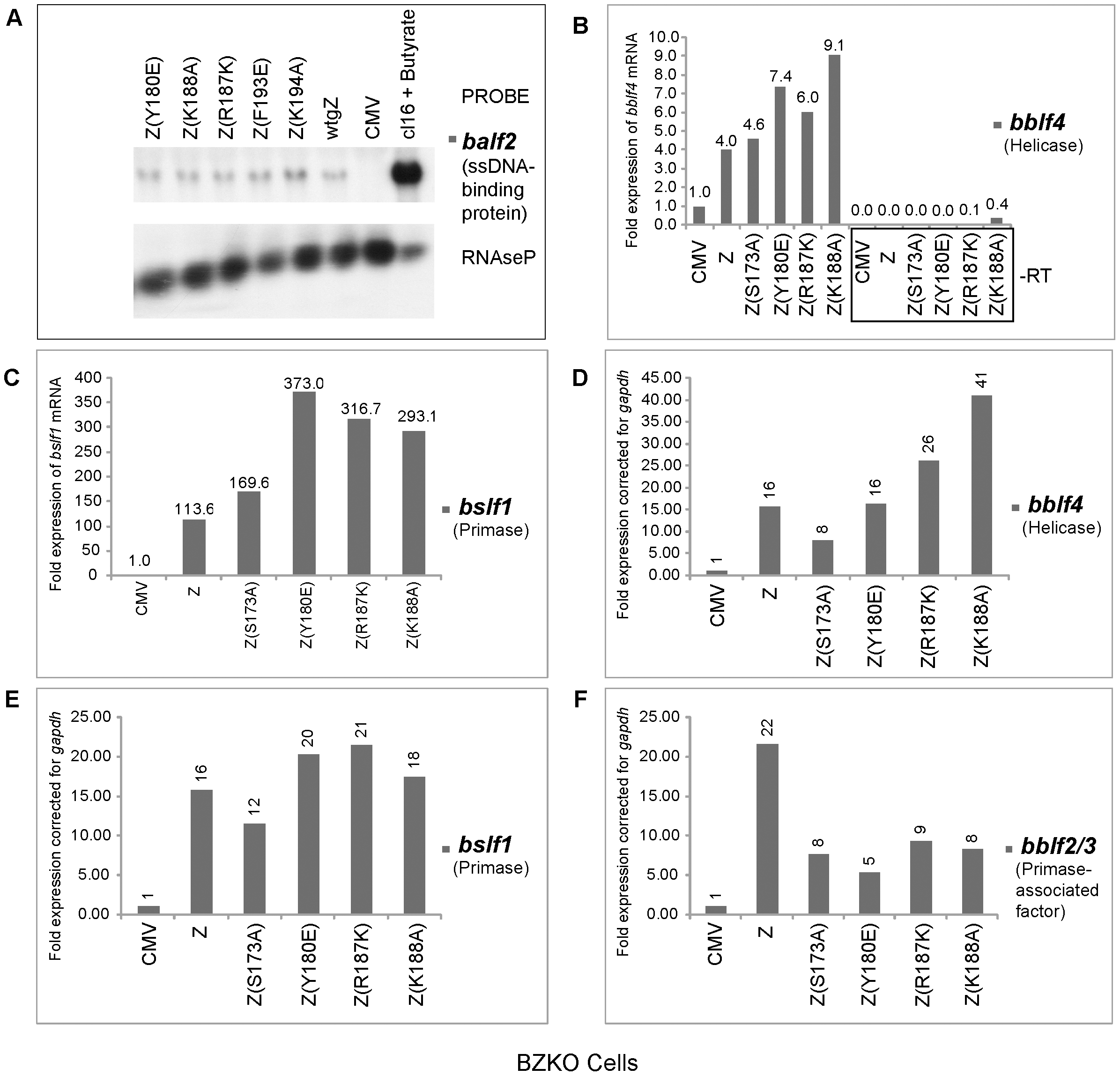 ZEBRA replication defective (RD) mutants are competent at activating expression of EBV genes encoding the viral lytic replication machinery.