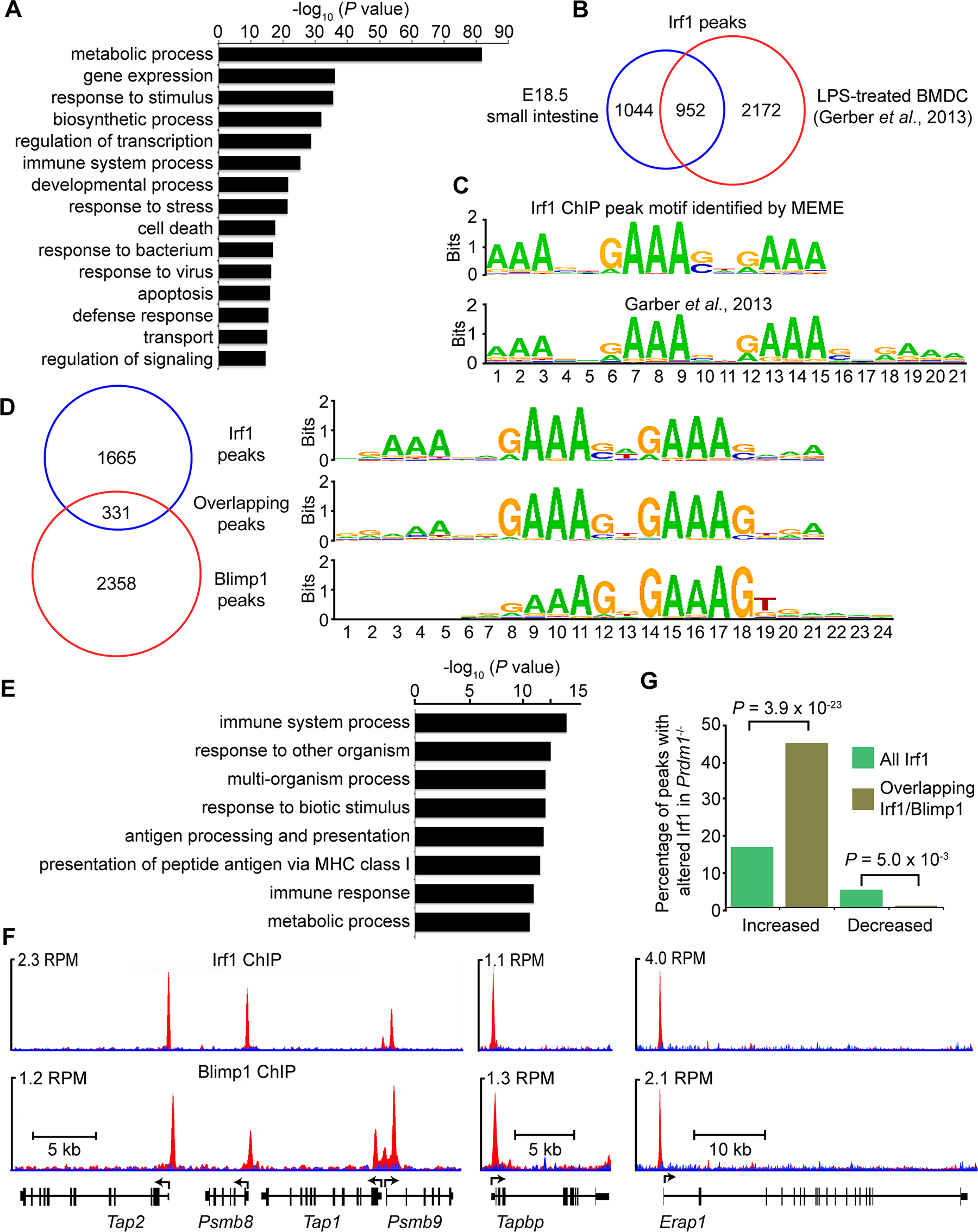 ChIP-seq analysis of genome-wide Irf1 binding sites in E18.5 small intestine.
