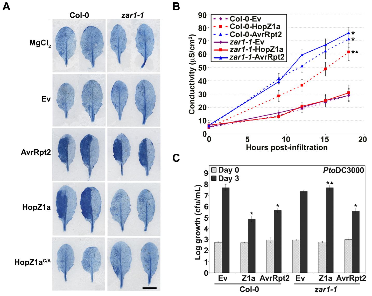 <i>zar1-1 Arabidopsis</i> plants do not display immunity against HopZ1a.