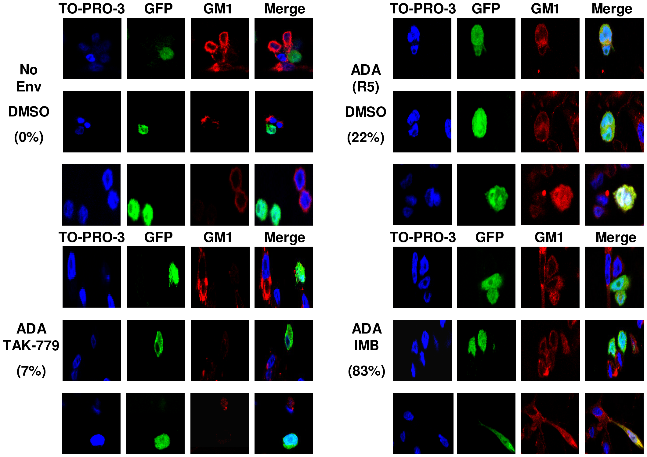 Abl kinase inhibitors arrest HIV-1 Env-mediated fusion at the hemifusion step.