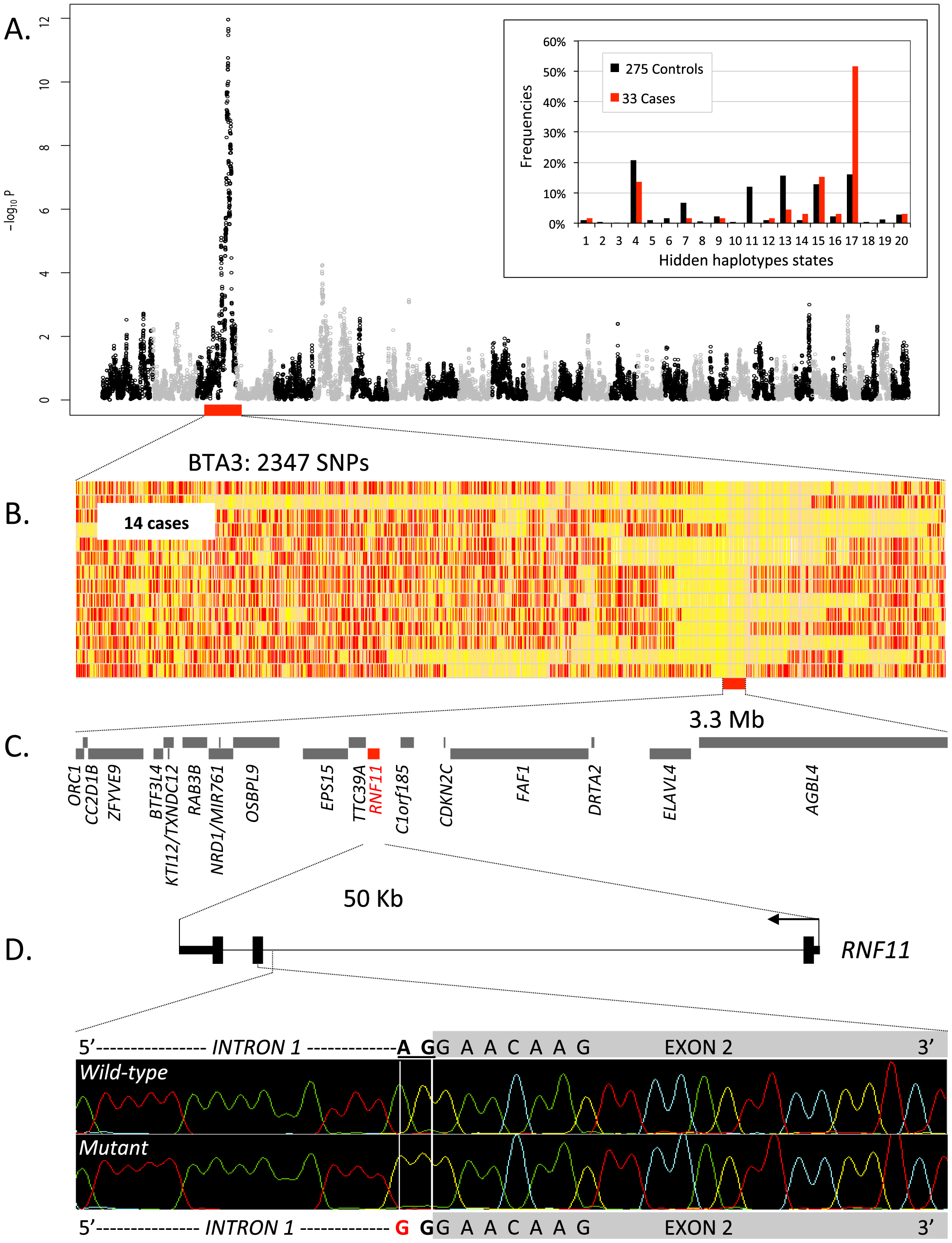 Genome-wide haplotype-based association mapping of a growth stunting locus on BTA 3.