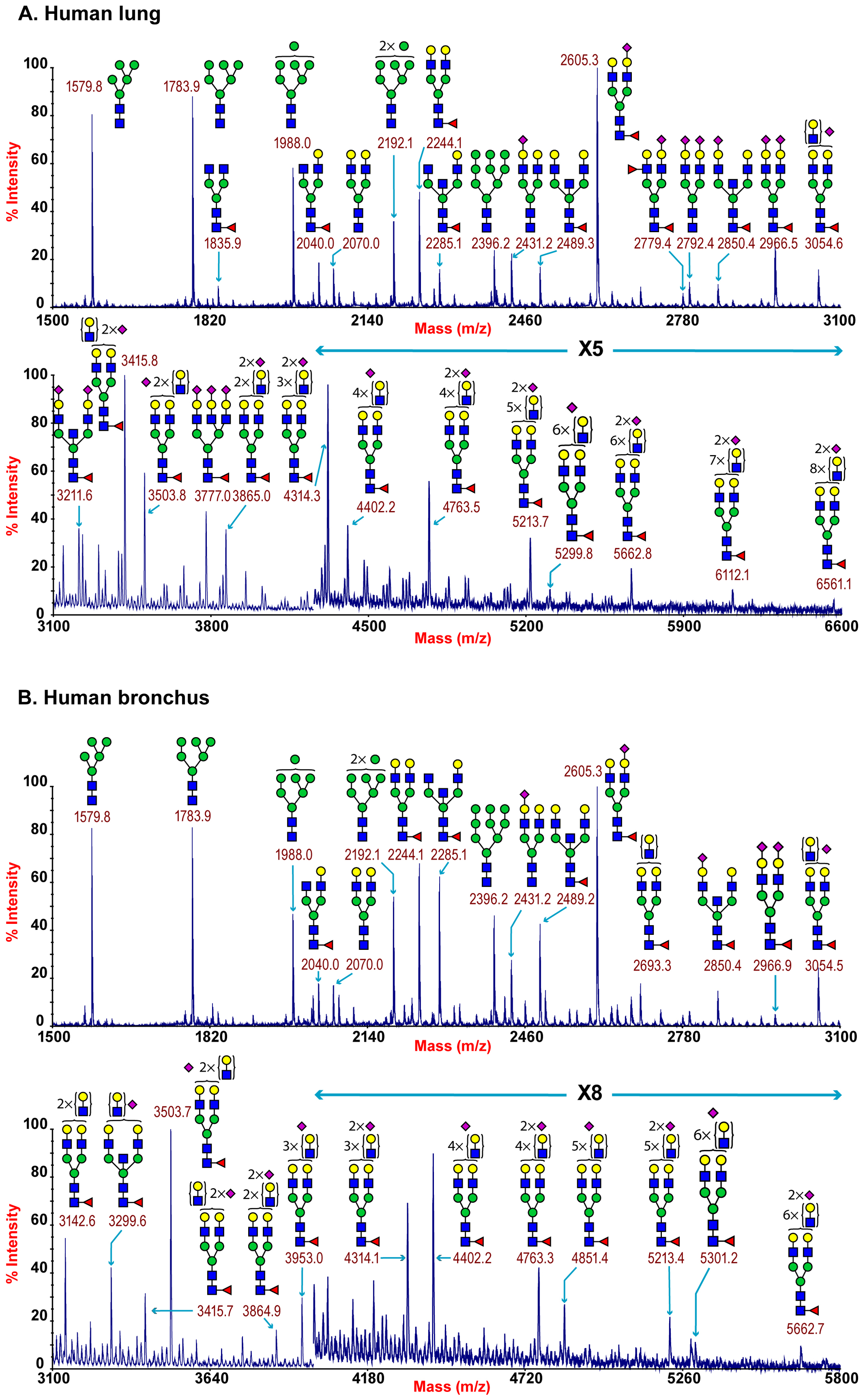 N-glycan profile of lung and bronchus.