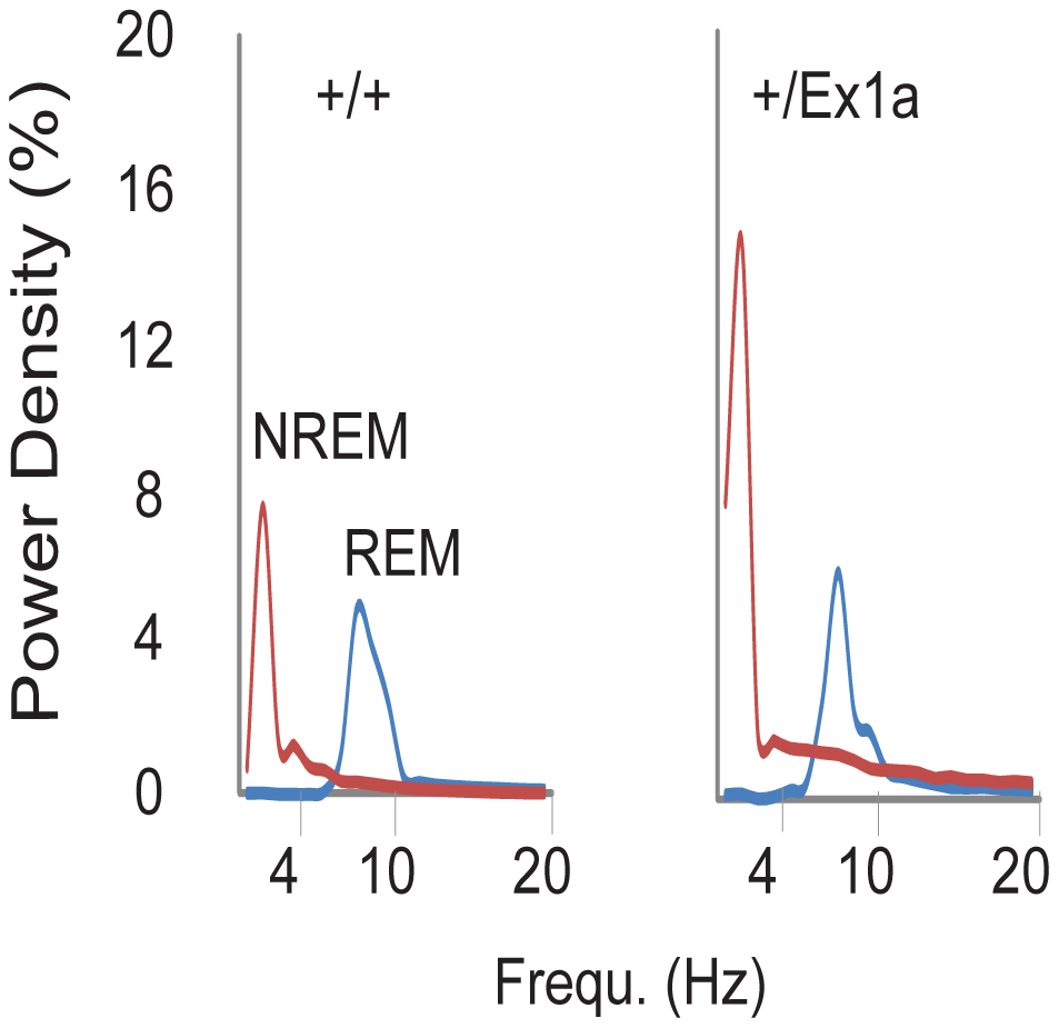 Representation of EEG frequencies in REM and NREM sleep.