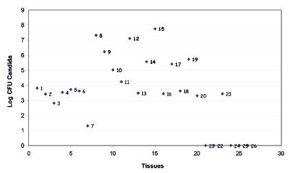 Graph 1. Candida DNA quantities post-mortem (numbers correspond to tissues in Table 1) Graf 1. Nálož kvasinkové DNA post-mortem (číslice odpovídají číslování tkání v tab. 1)