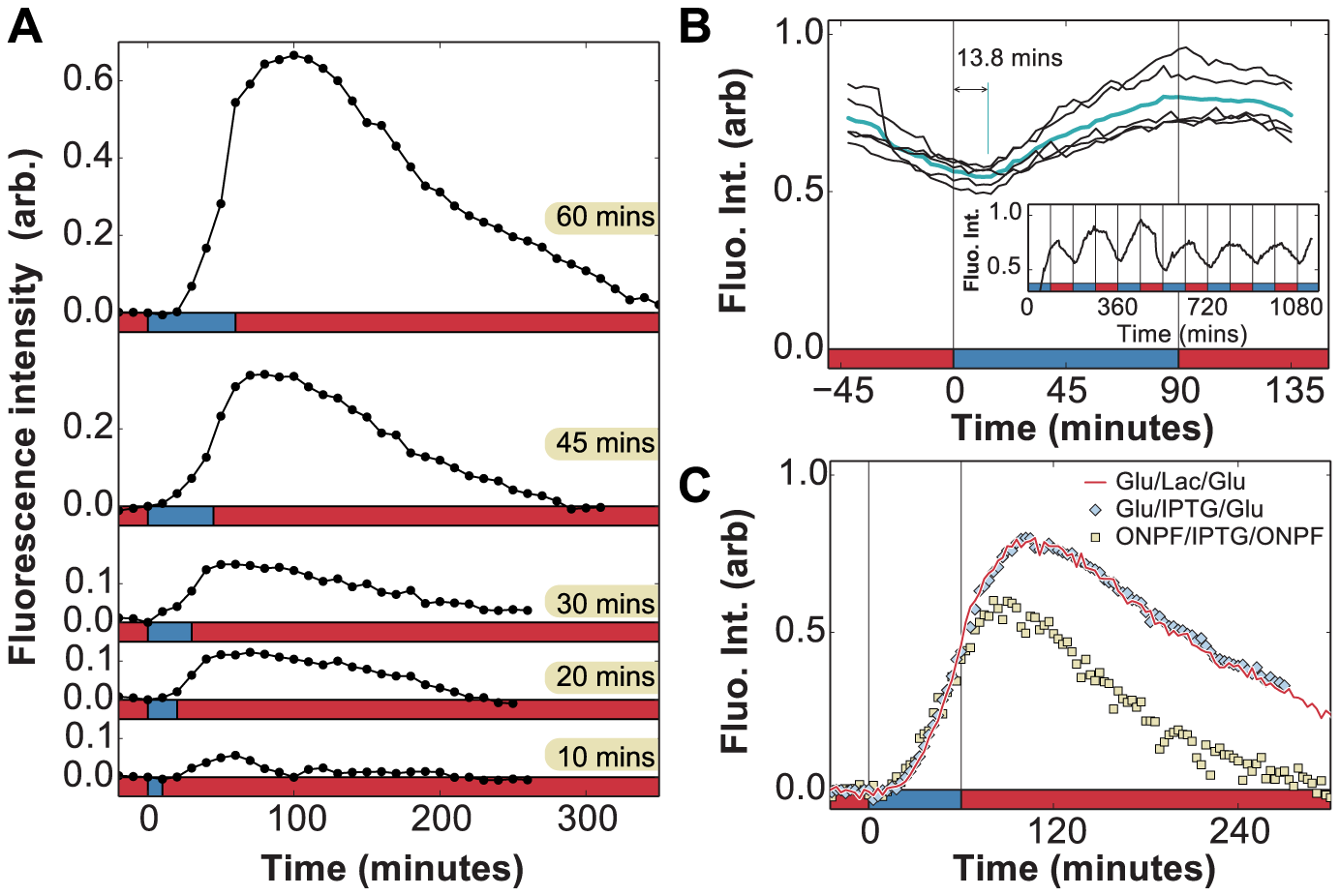 <i>In vivo</i> measurement of LacY expression in fluctuating environments.