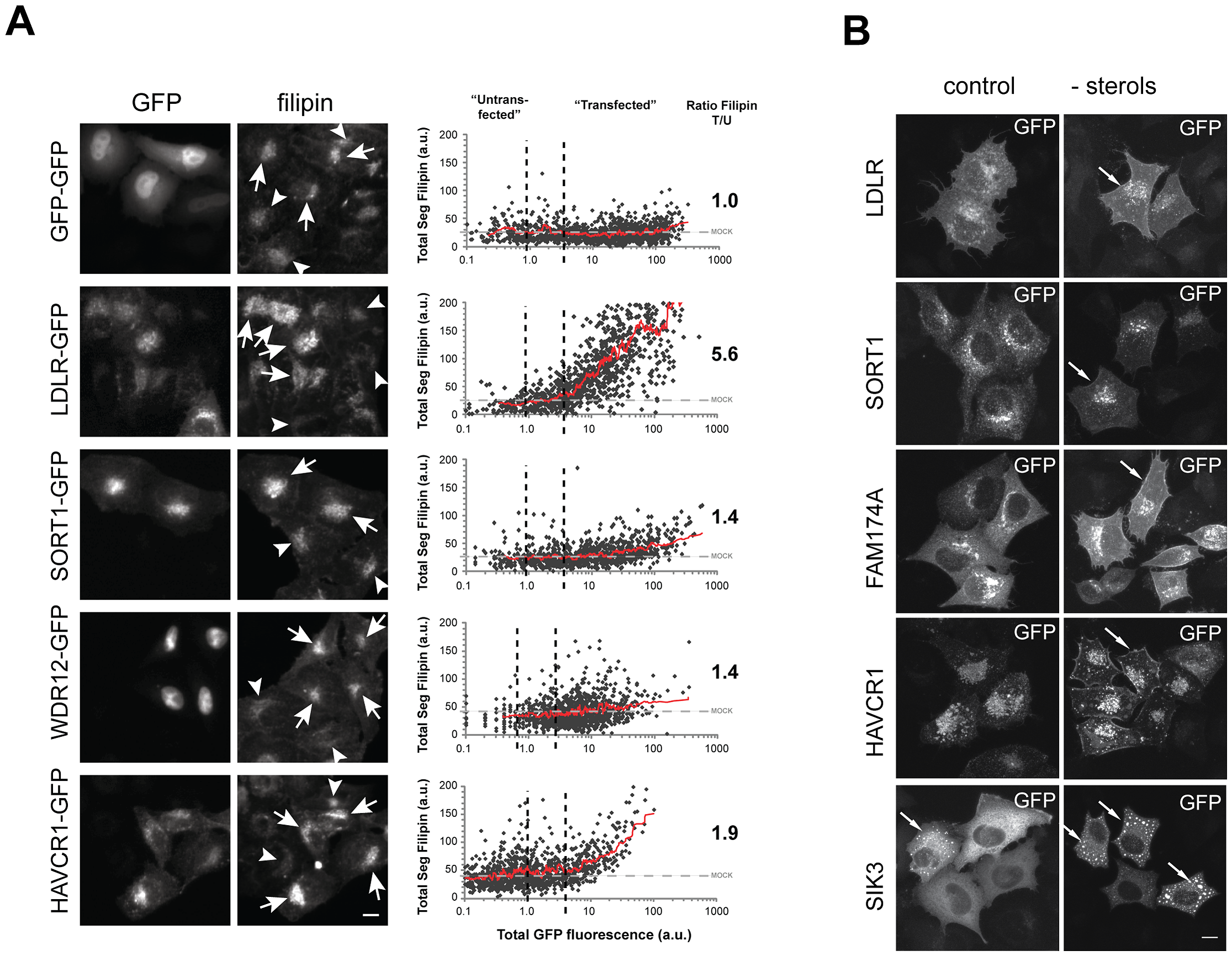 Impact on FC levels and subcellular localization of GFP–tagged candidate genes.