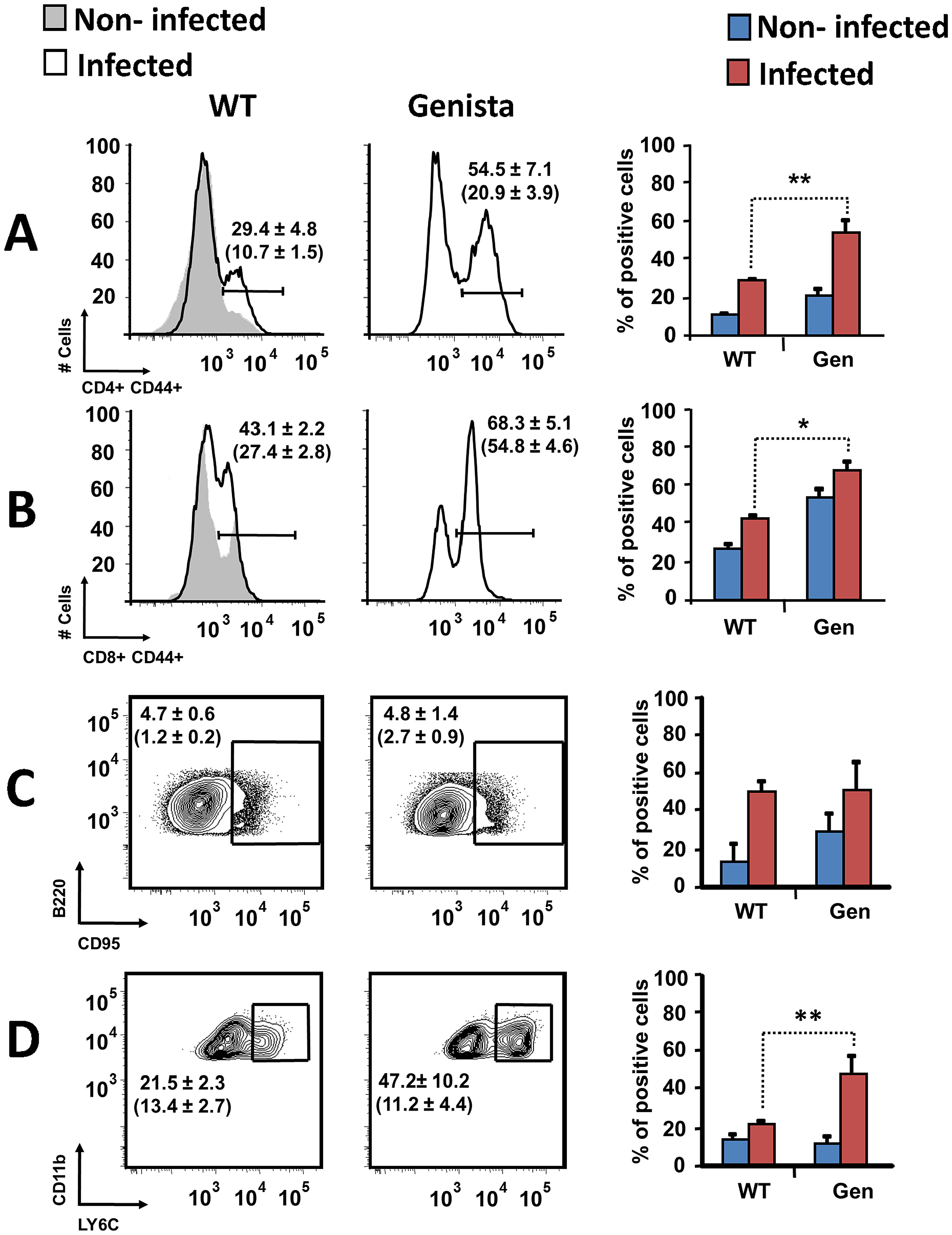 Activation of T and B lymphocytes and recruitment of monocytes in WT and Genista mice at 15 days post-infection.