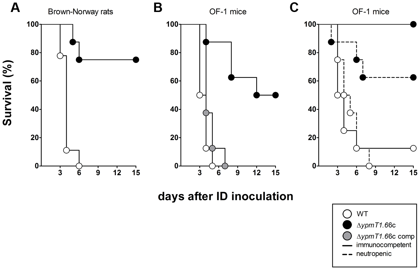 Incidence of plague in immunocompetent rats (A), immunocompetent mice (B), and neutropenic mice (C) injected intradermally with ∼20 WT <i>Y. pestis</i> (white circles), Δ<i>ypmt1.66c</i> (black circles) or complemented mutant (grey circles).