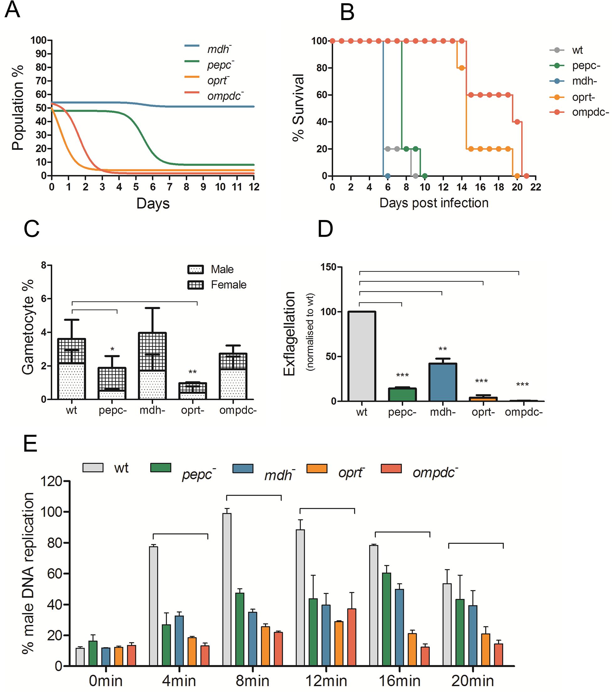 Phenotypic analyses of blood stage mutant <i>P</i>. <i>berghei</i> parasites.