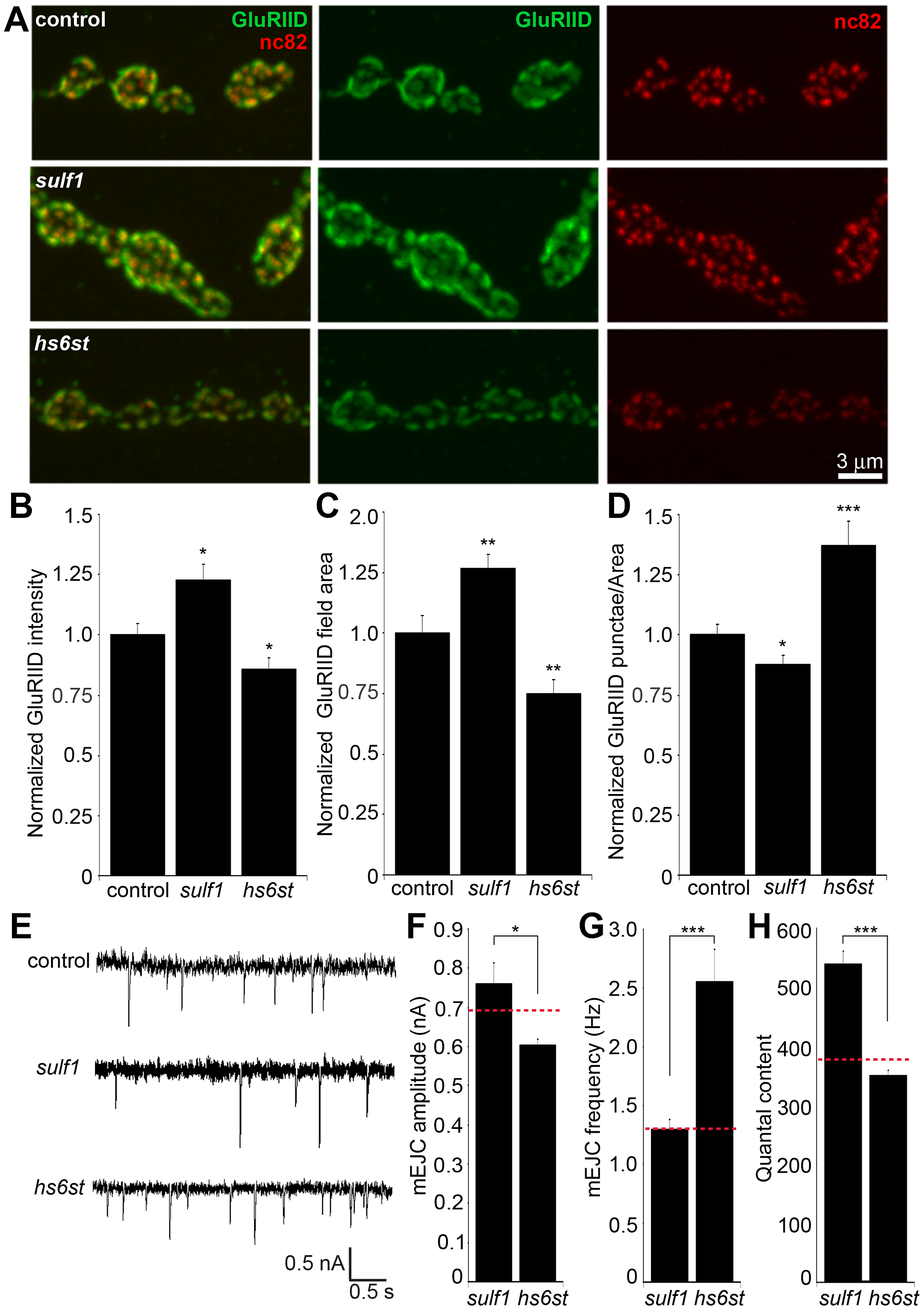 Bi-directional effects of <i>sulf1</i> and <i>hs6st</i> nulls on synaptic assembly.