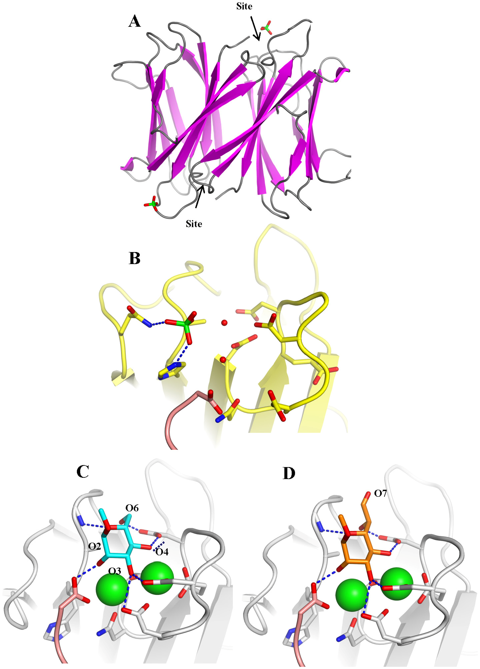 Crystal structure of apoBC2L-C C-terminal domain.
