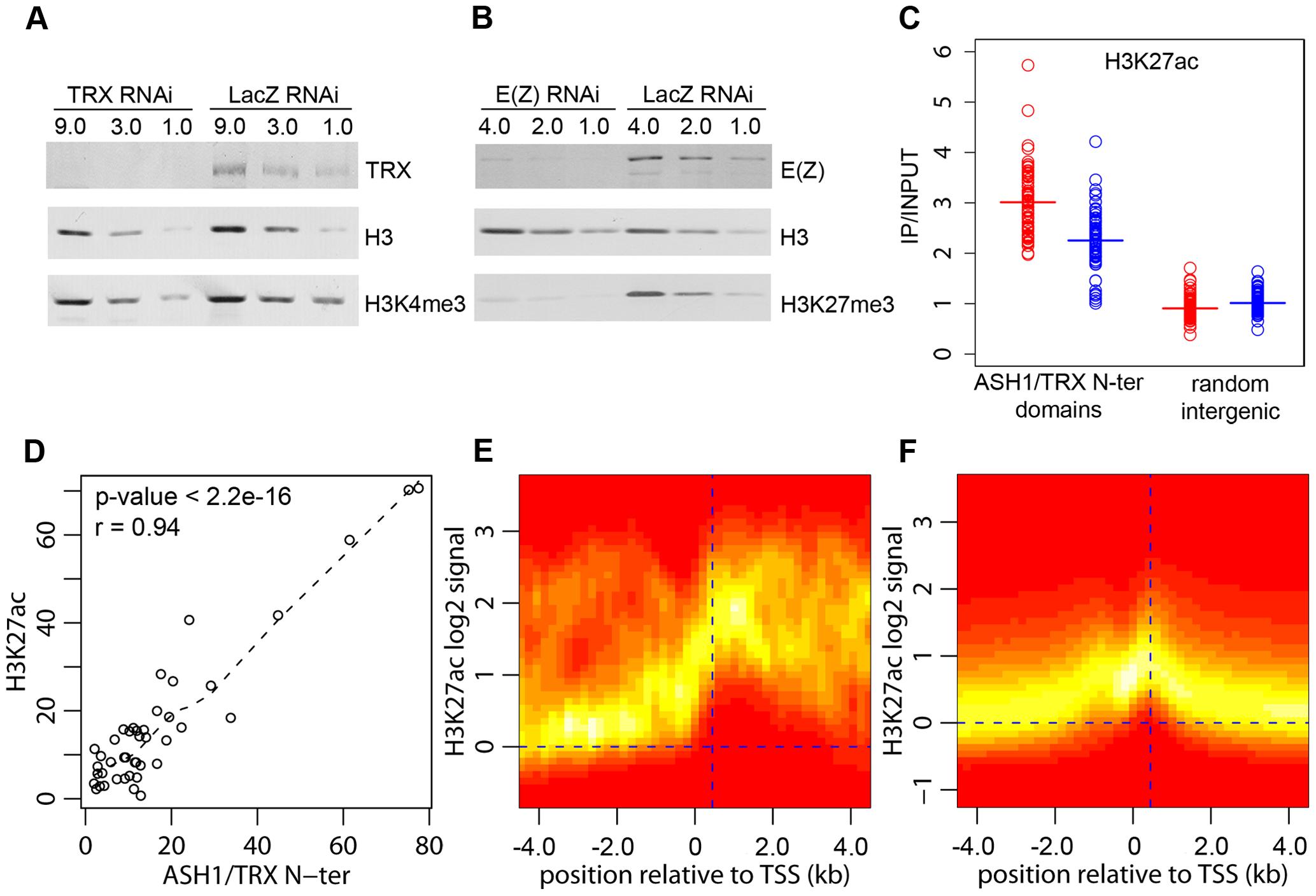 H3K27ac and ASH1/TRX N-ter domains.