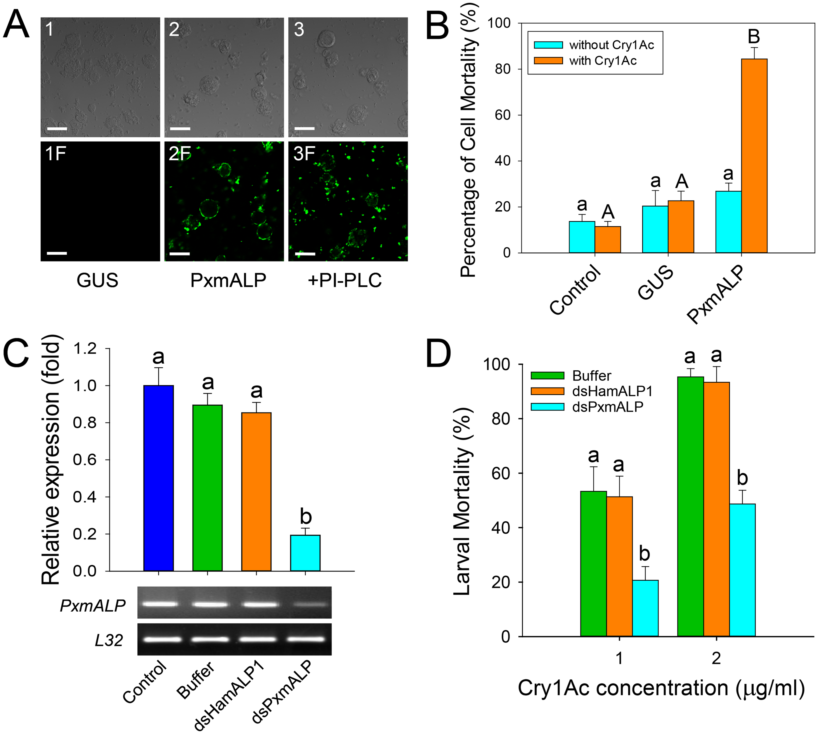Heterologous expression and silencing of <i>PxmALP</i> have obvious effects on susceptibility to Cry1Ac.