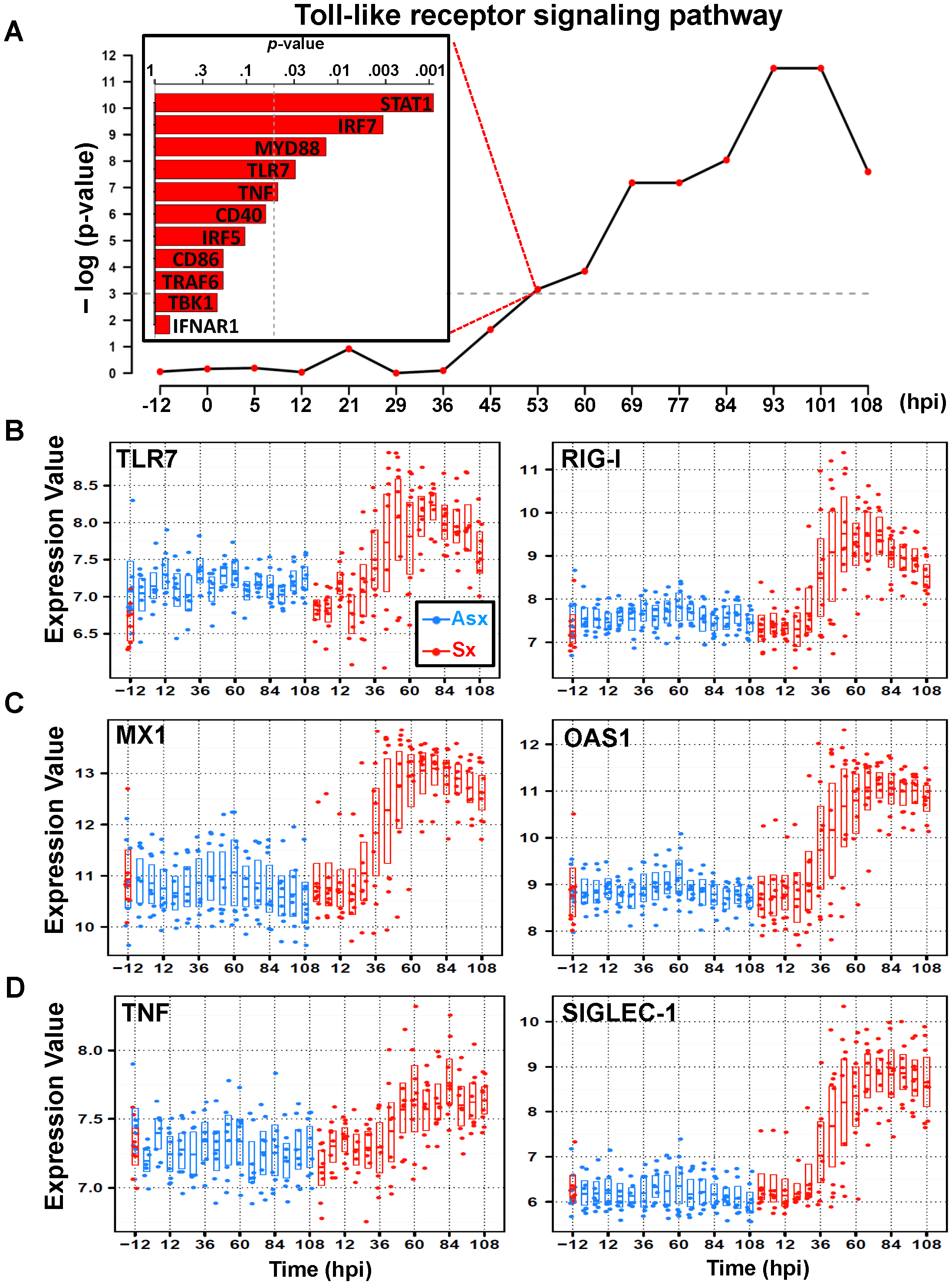 Similar expression dynamics of TLR7-pathway effector genes in cluster 3.