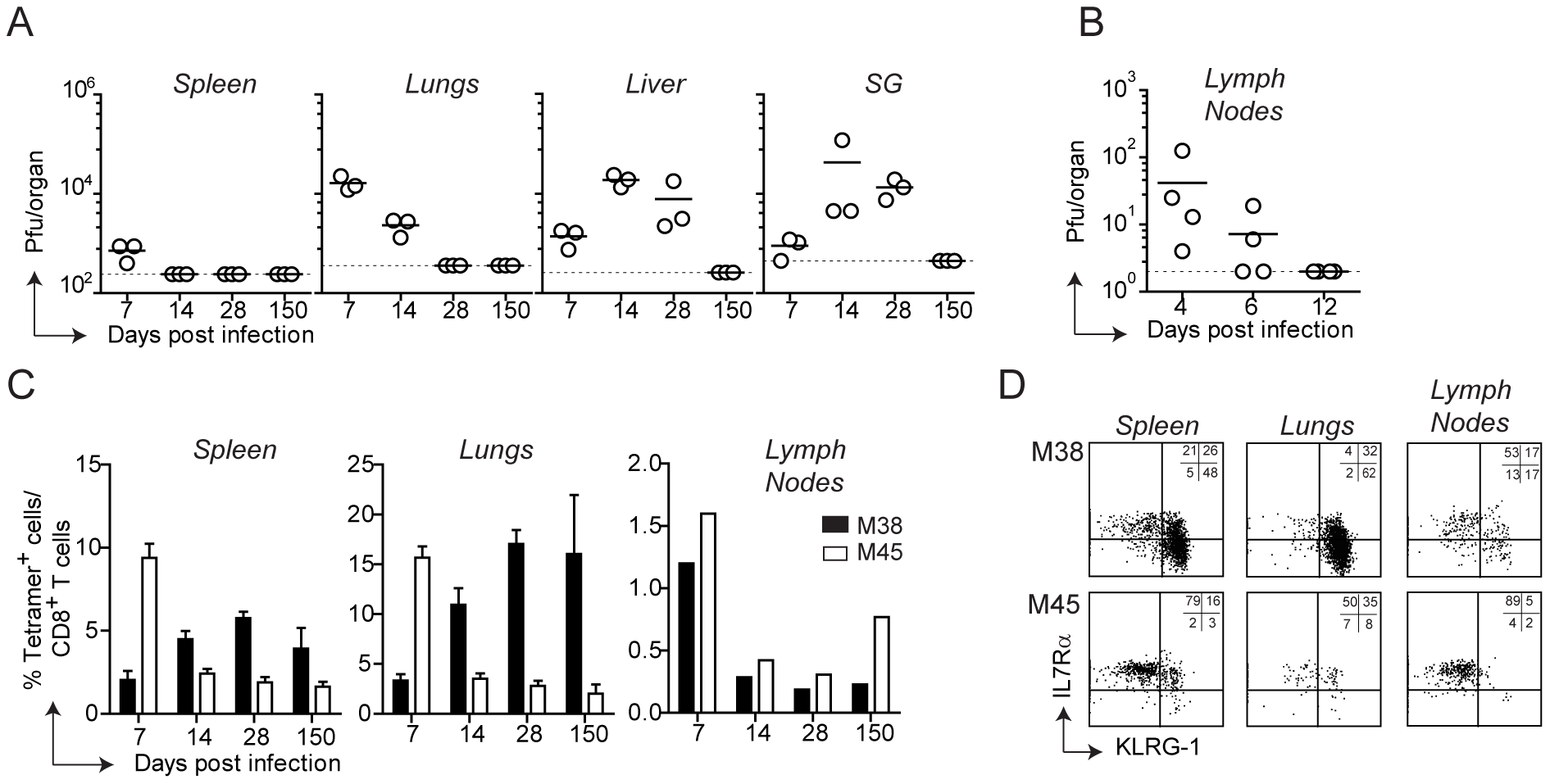 Tissue-specific pattern of MCMV-specific CD8 T cell responses.