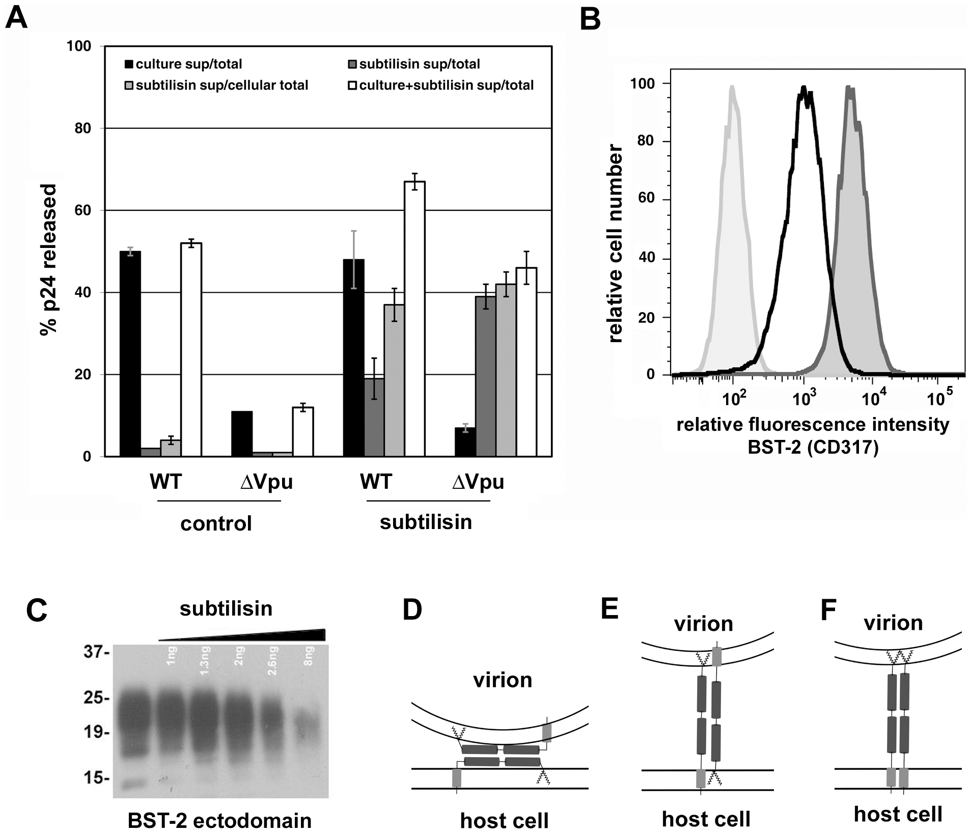 Release of nascent virions and the BST-2 ectodomain by proteolysis of the cell surface with subtilisin; models of direct tethering.