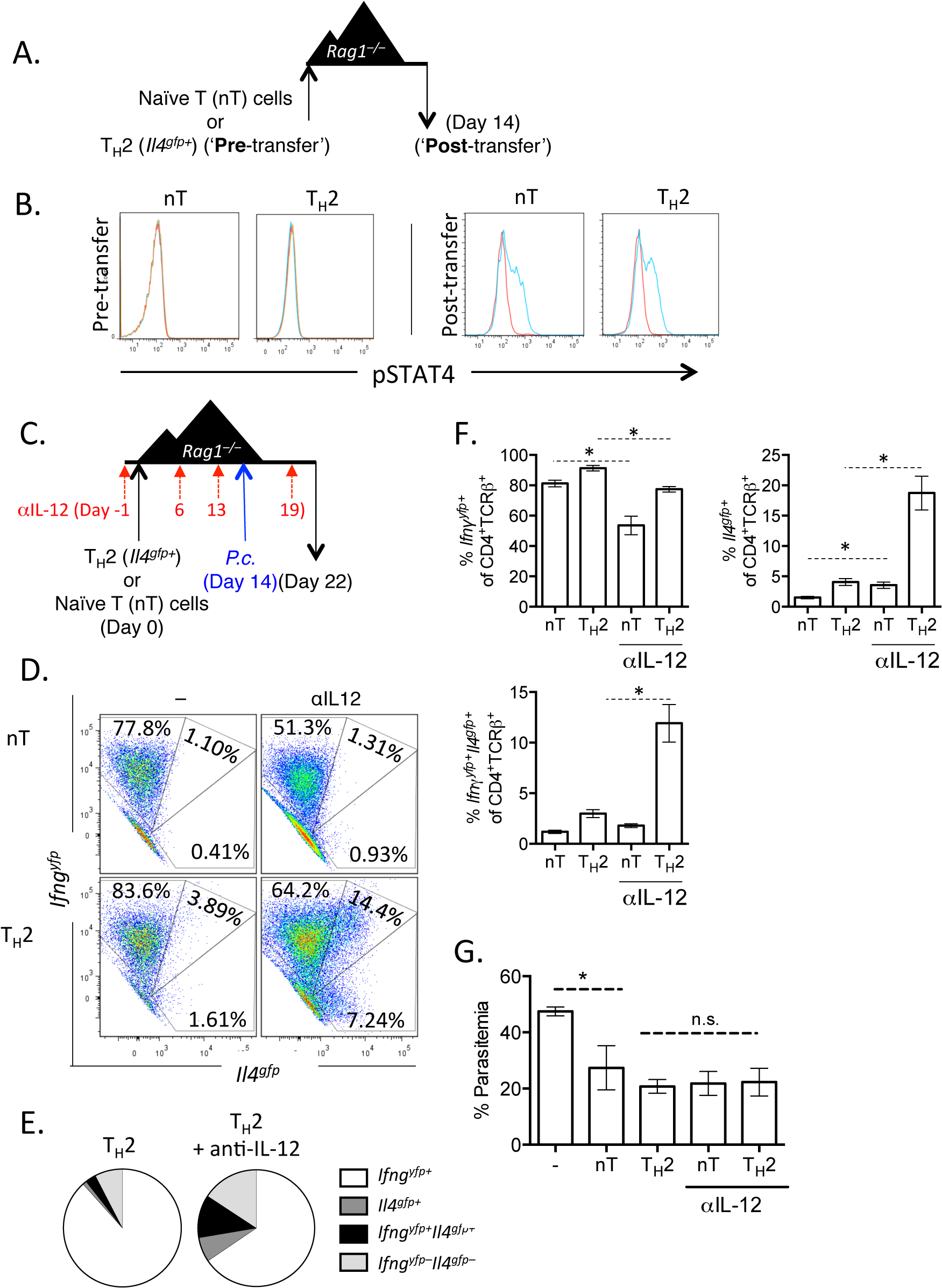 Th2 cells become IL-12 responsive following adoptive transfer.
