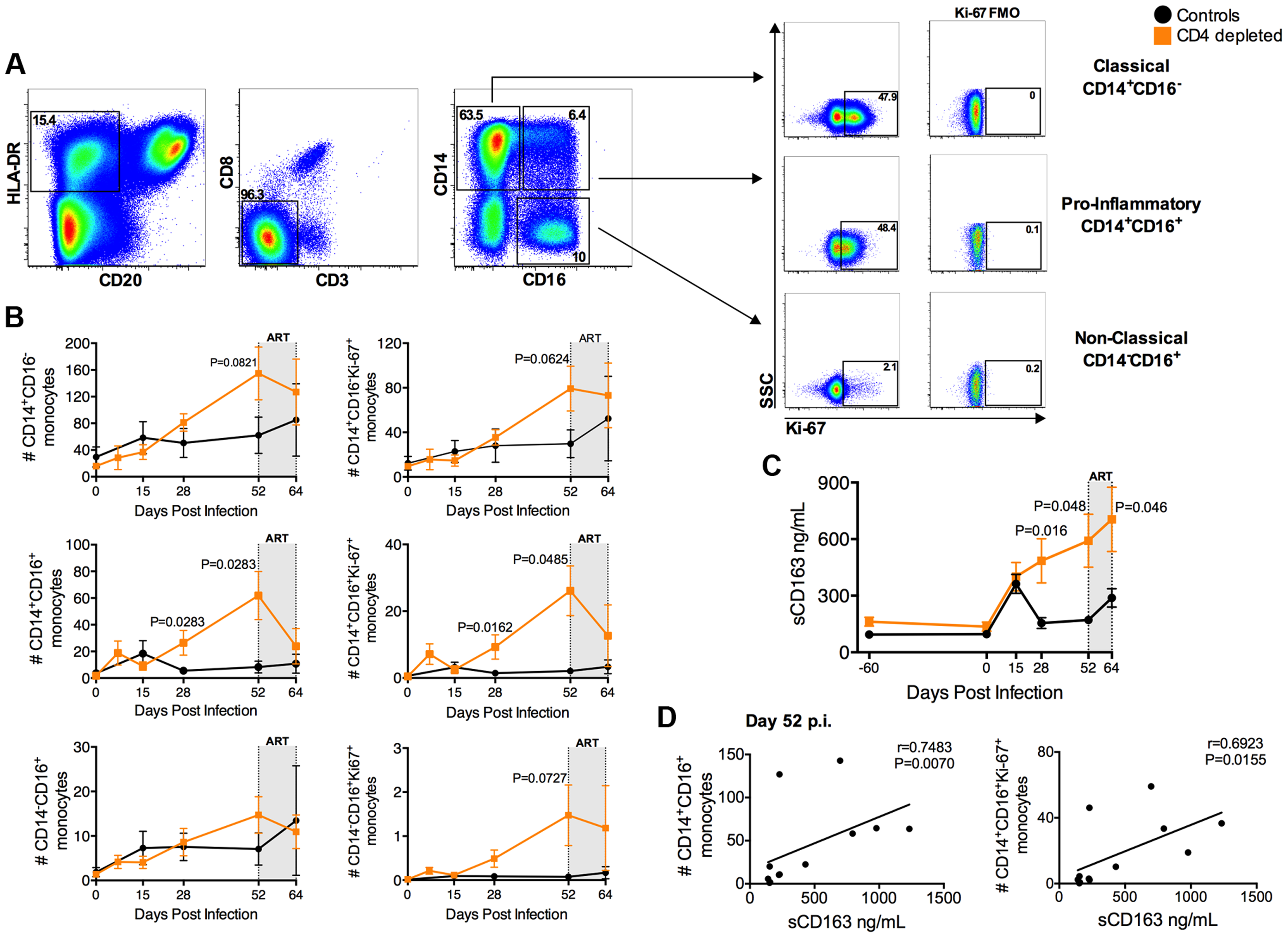 Expansion of activated, pro-inflammatory monocytes in CD4-depleted SIV-infected RMs.
