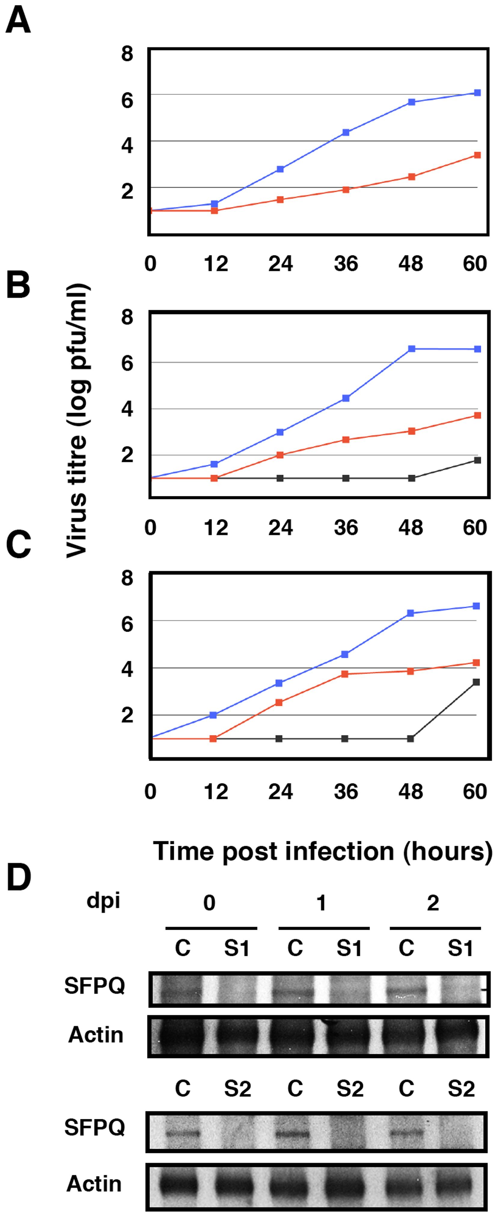 Kinetics of influenza virus multiplication in SFPQ/PSF-silenced cells.