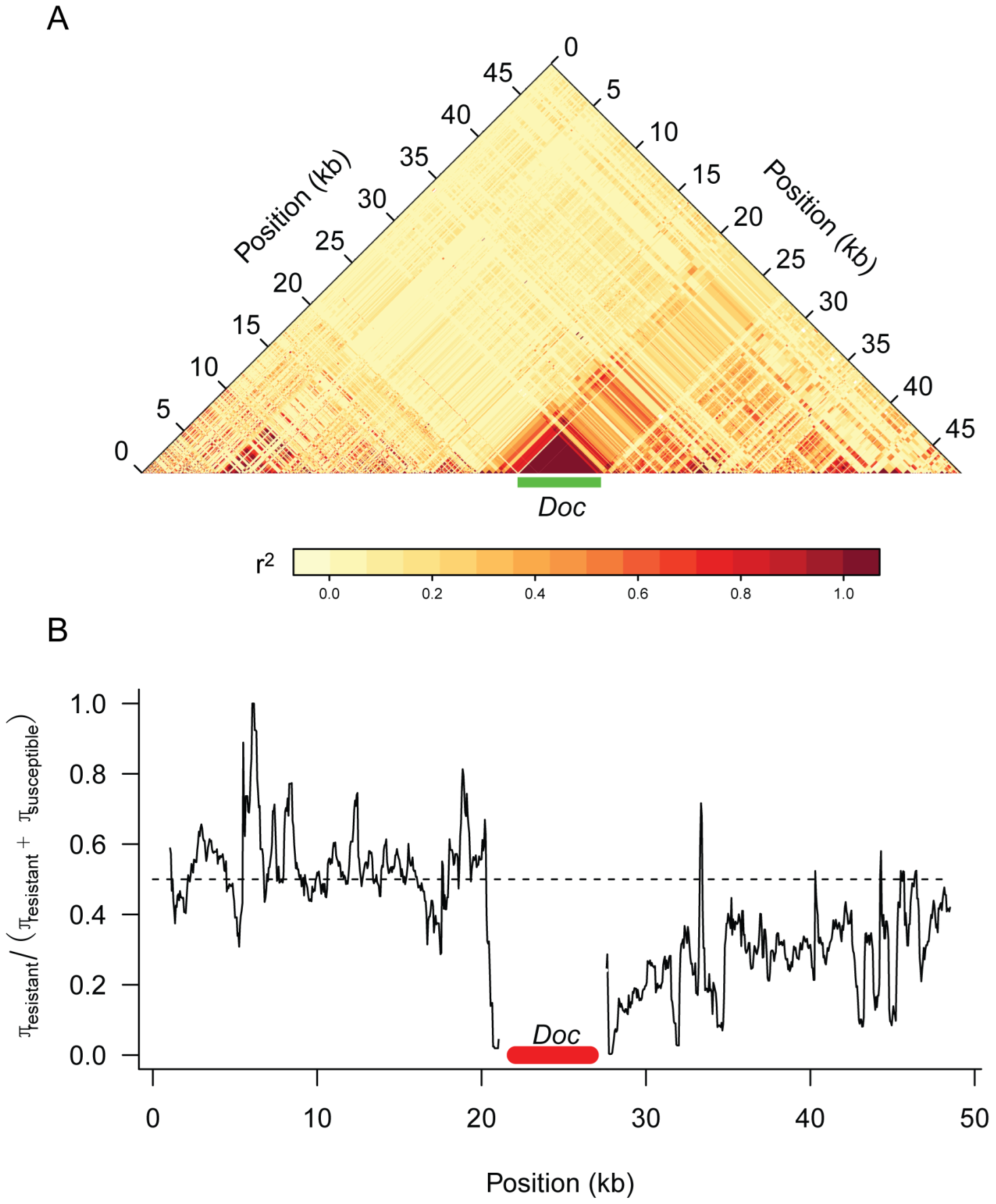 Genetic variation around the <i>CHKov</i> genes.