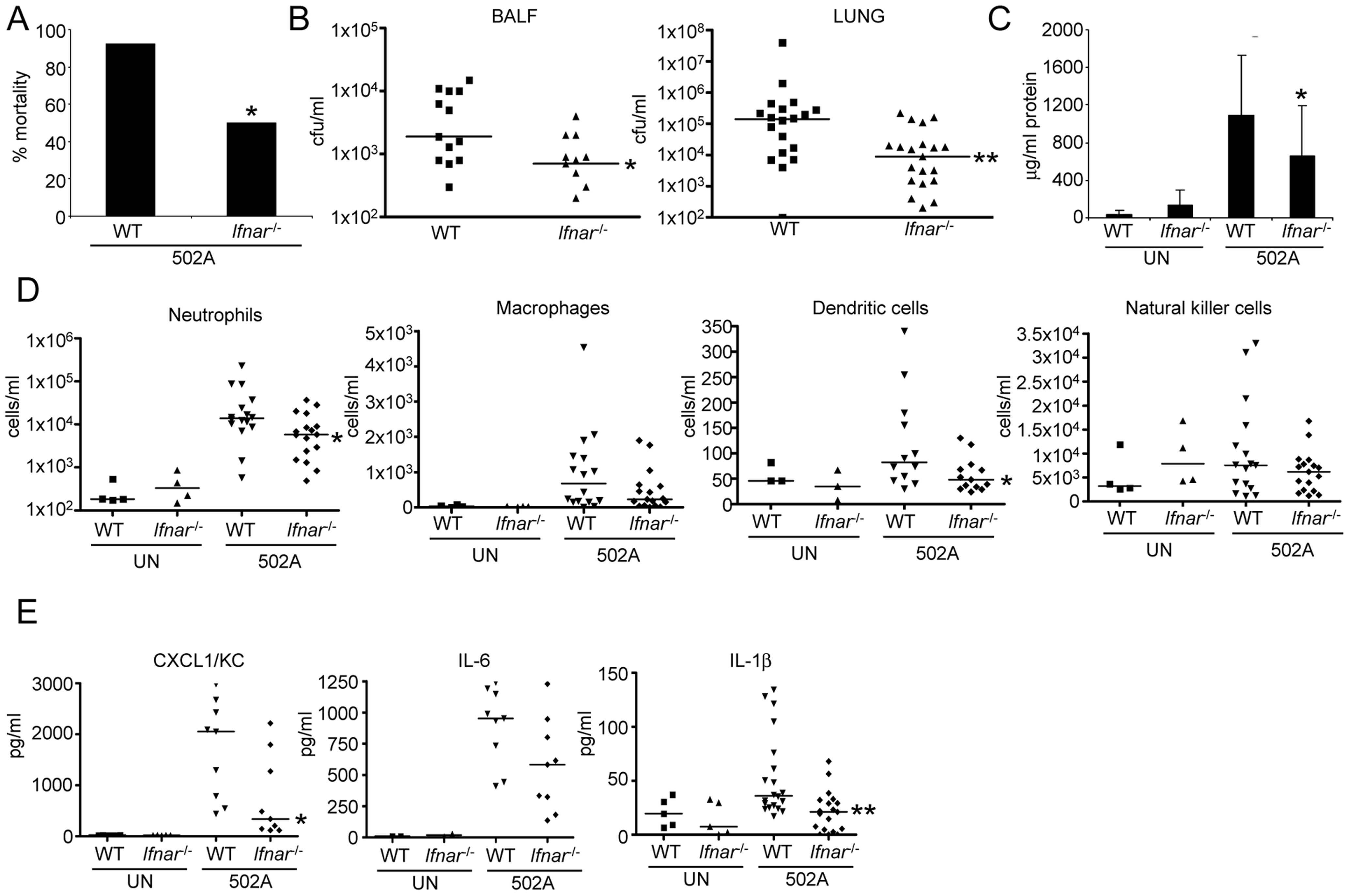 Type I IFN signaling contributes to in vivo virulence of 502A.