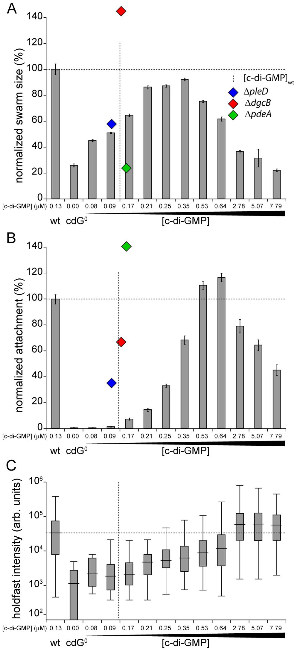 Motility and surface attachment show distinct <i>in vivo</i> c-di-GMP dose-response curves.