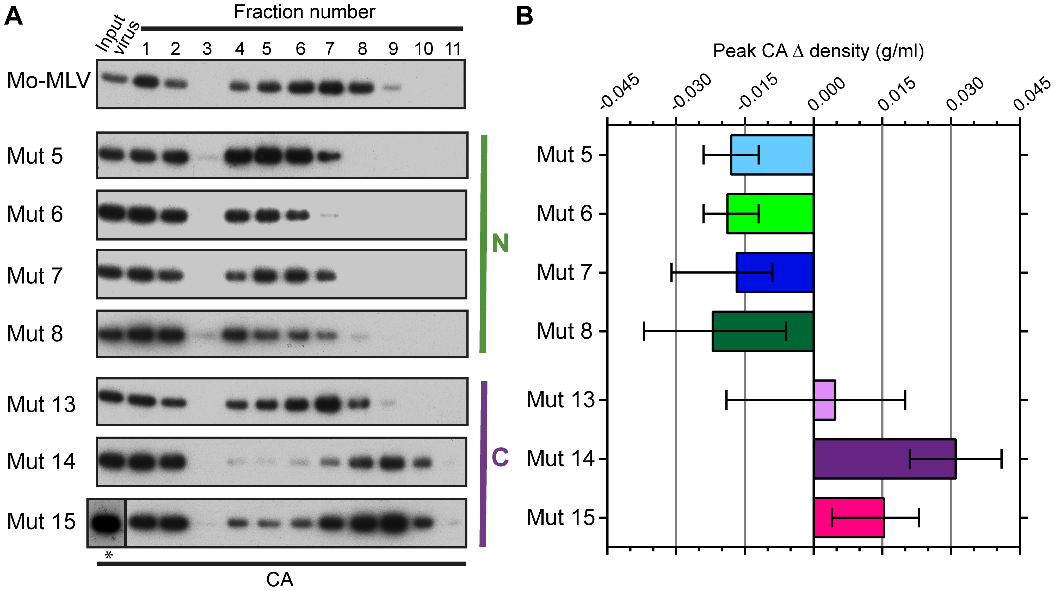 The effect of p12 mutations on the biophysical properties of the Mo-MLV intra-virion CA core.