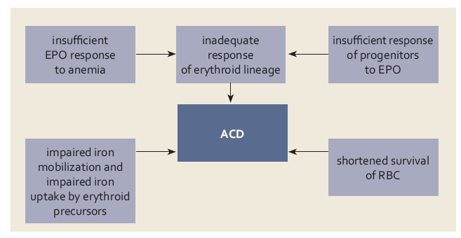Základní mechanizmy uplatňující se v patogenezi anémie při chronickém onemocnění (ACD) (bližší vysvětlení v textu). Fig. 4. Basic mechanisms involved in the pathogenesis of anaemia in chronic dis ease (ACD) (detailed explanation in the text).