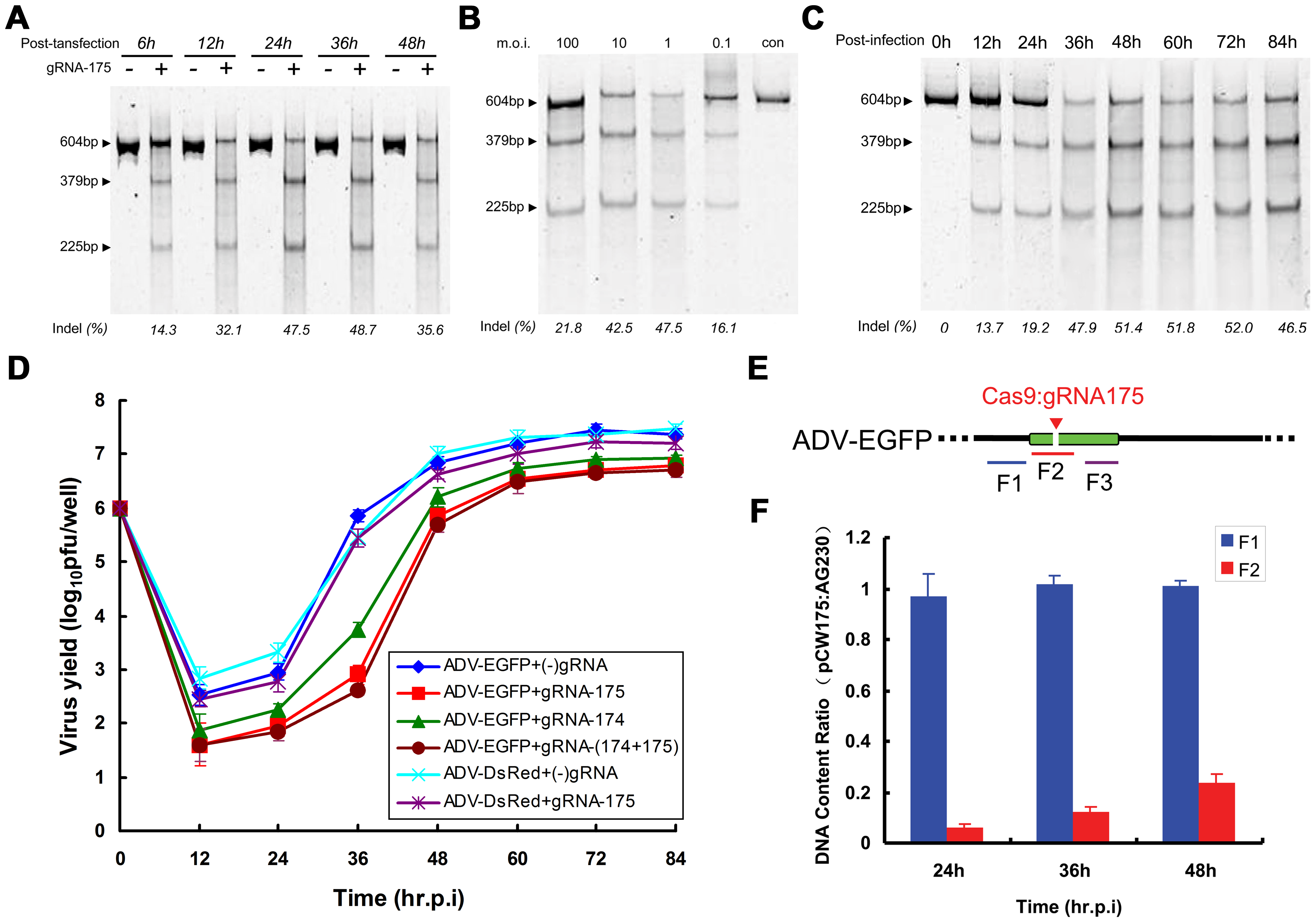 Factors affecting the efficiency of Cas9-mediated viral genome indels during adenovirus infection.