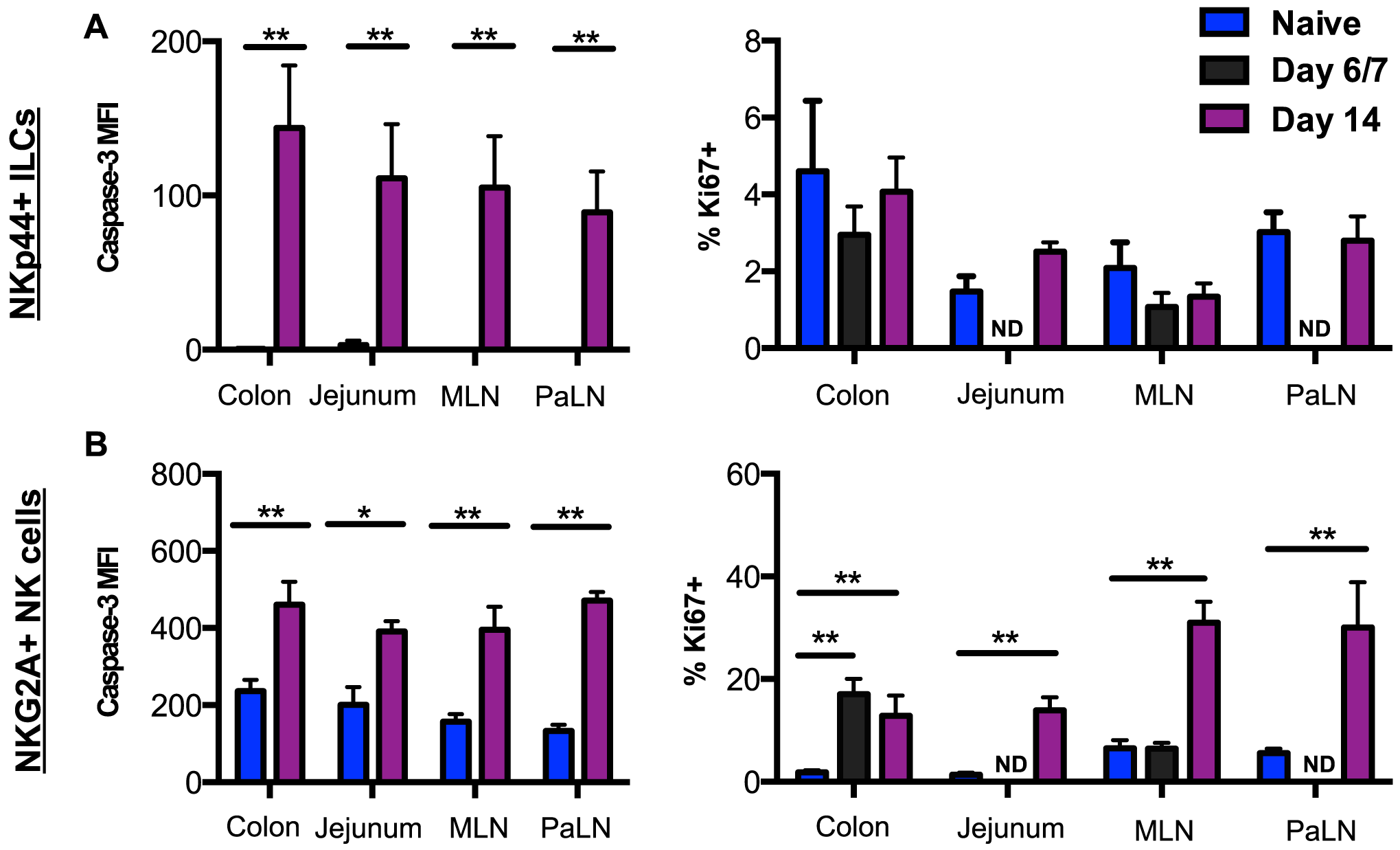SIV-induced turnover of NK cells and ILCs in intestinal mucosae.
