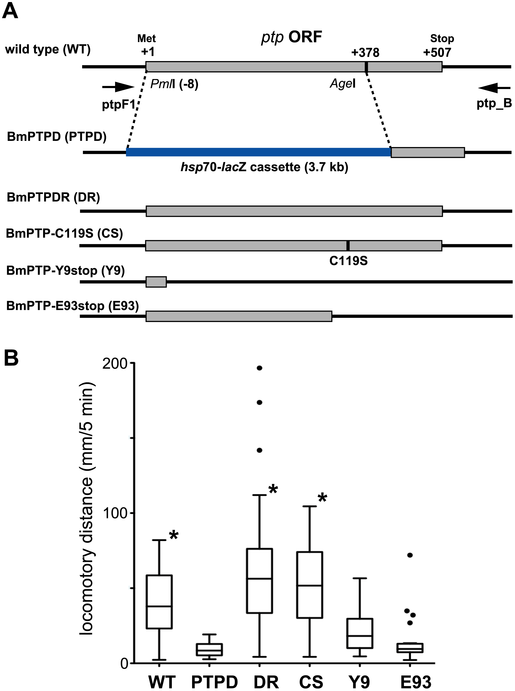 Effect of mutation of the BmNPV <i>ptp</i> gene on virus-induced ELA in 5<sup>th</sup> instar <i>B. mori</i>.