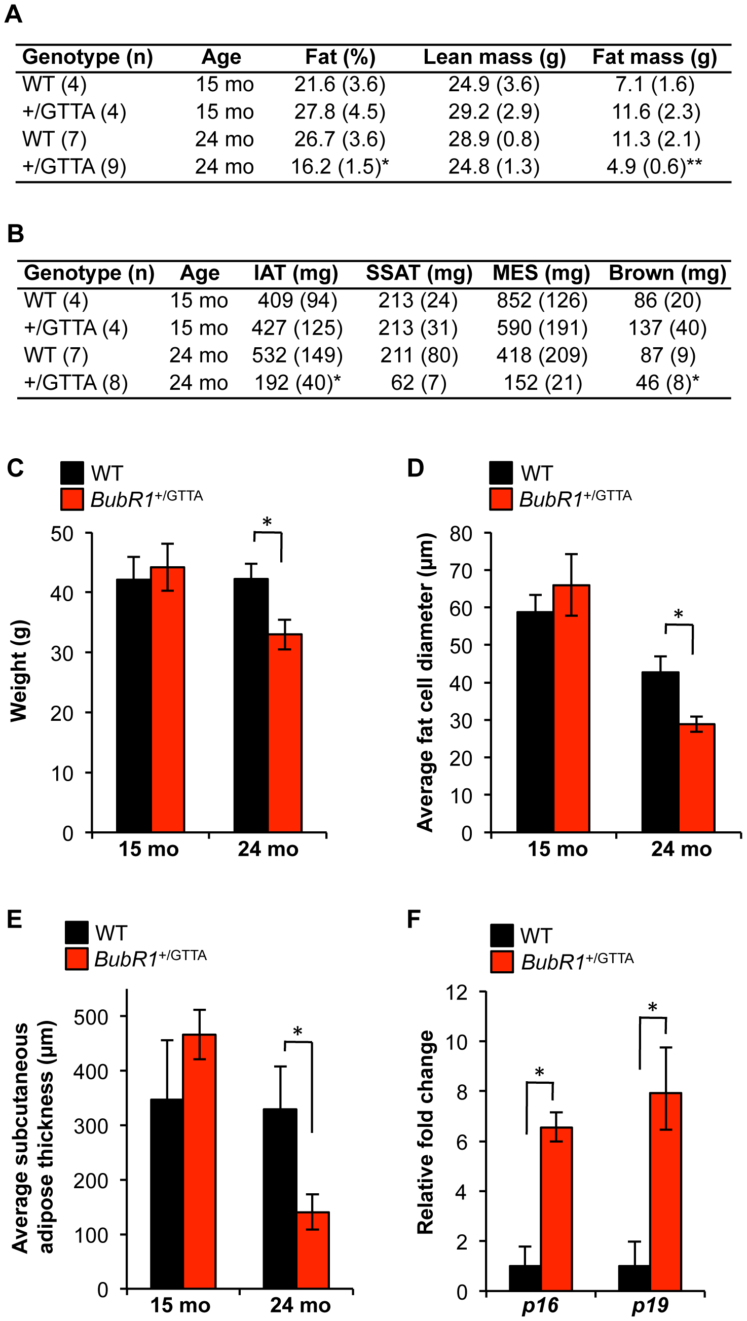 Age-related fat loss in <i>BubR1</i><sup>+/GTTA</sup> mice.