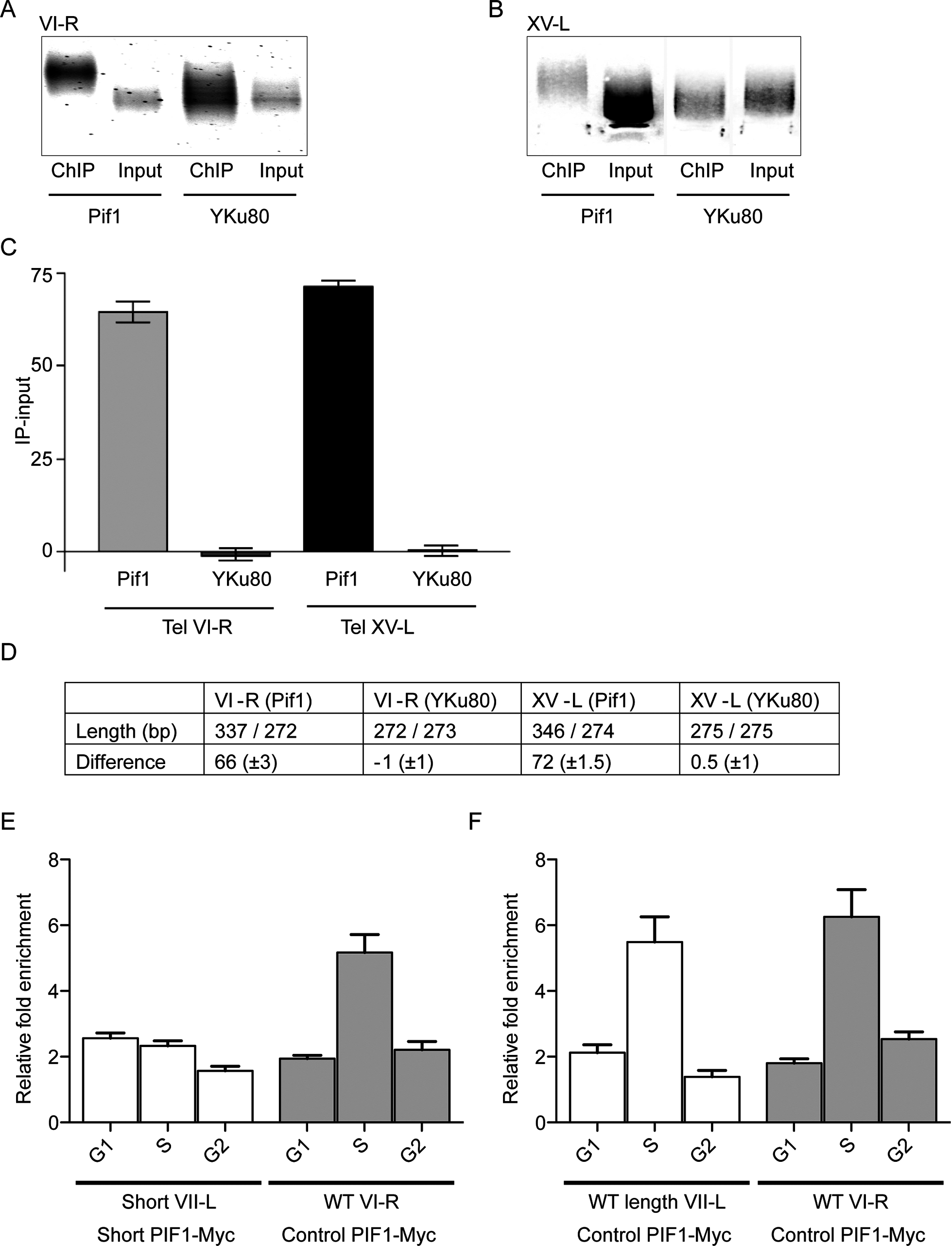 Pif1 preferentially binds to long telomeres.