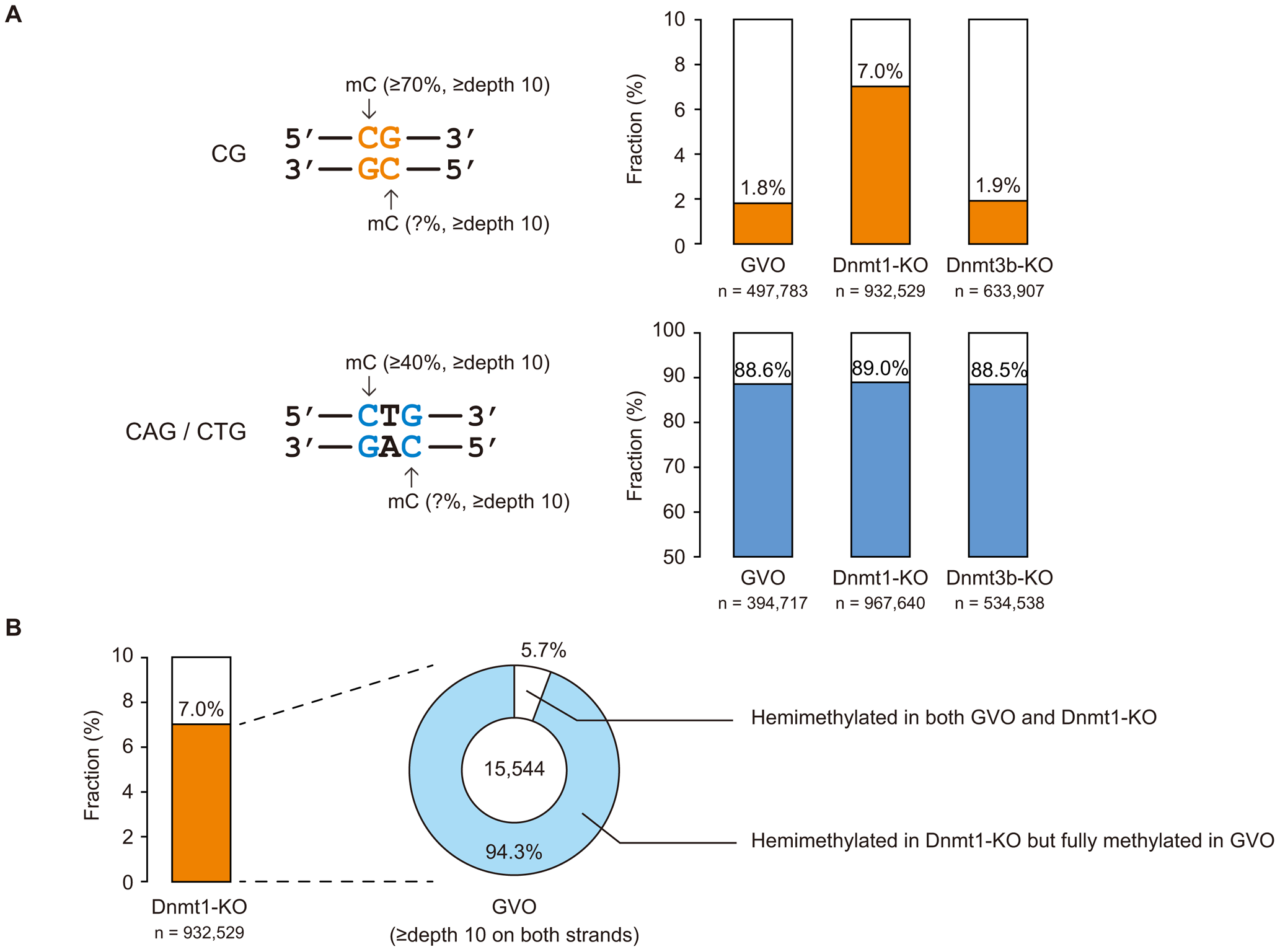 Strand asymmetry in methylation at CG and non-CG sites.
