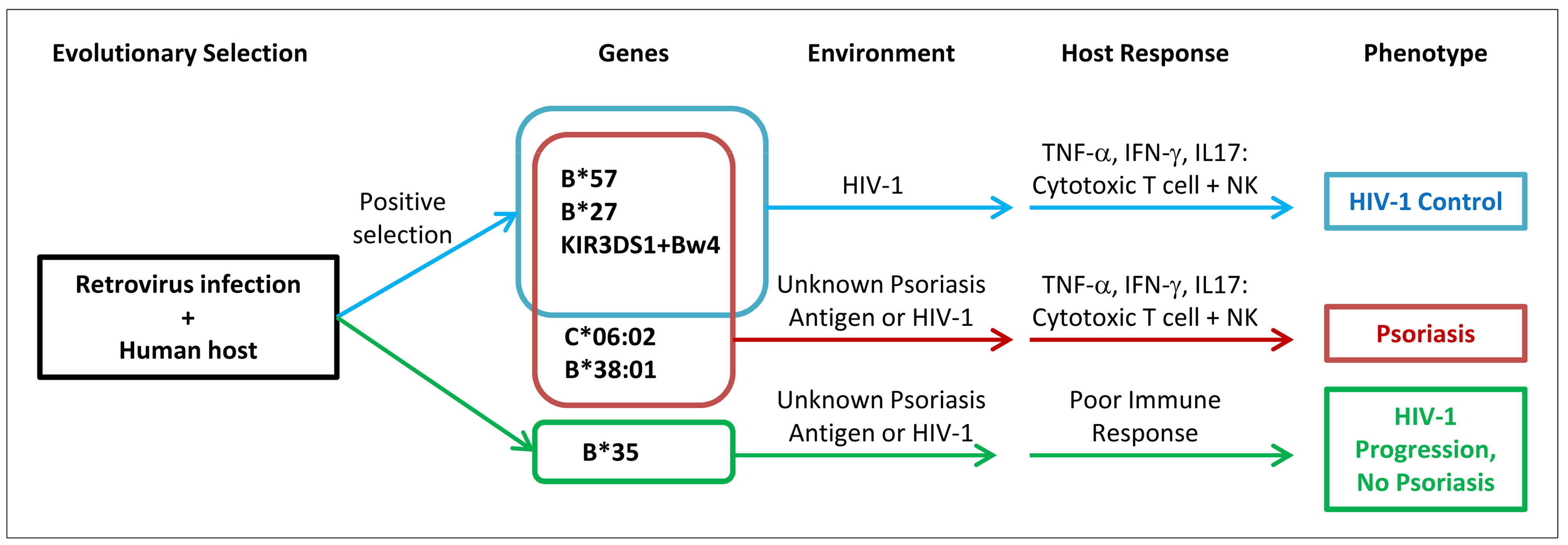 Proposed model of relationship between psoriasis and HIV-1 control.