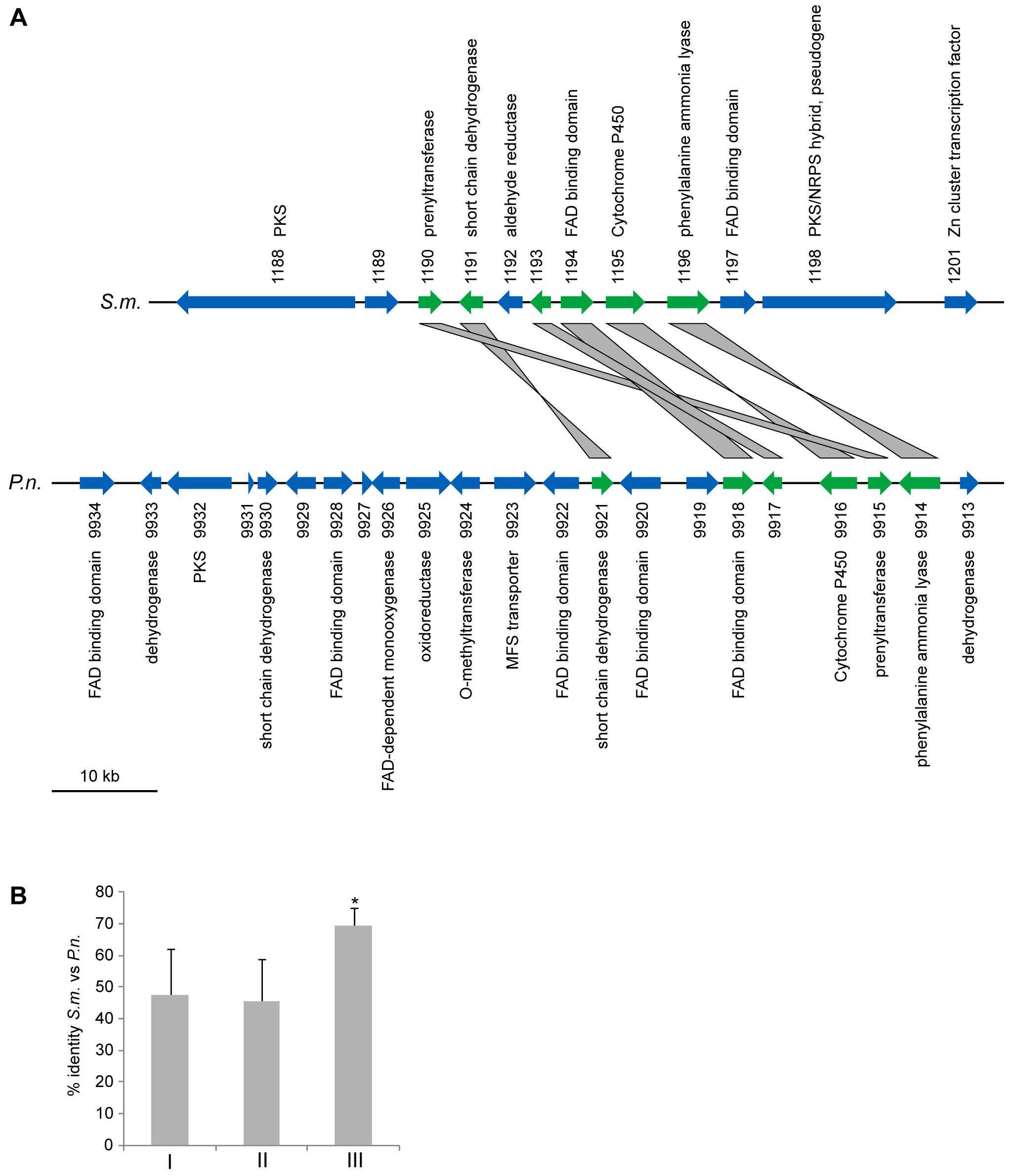 A partly orthologous polyketide biosynthesis cluster in <i>S. macrospora</i> and <i>Phaeosphaeria nodorum</i>.