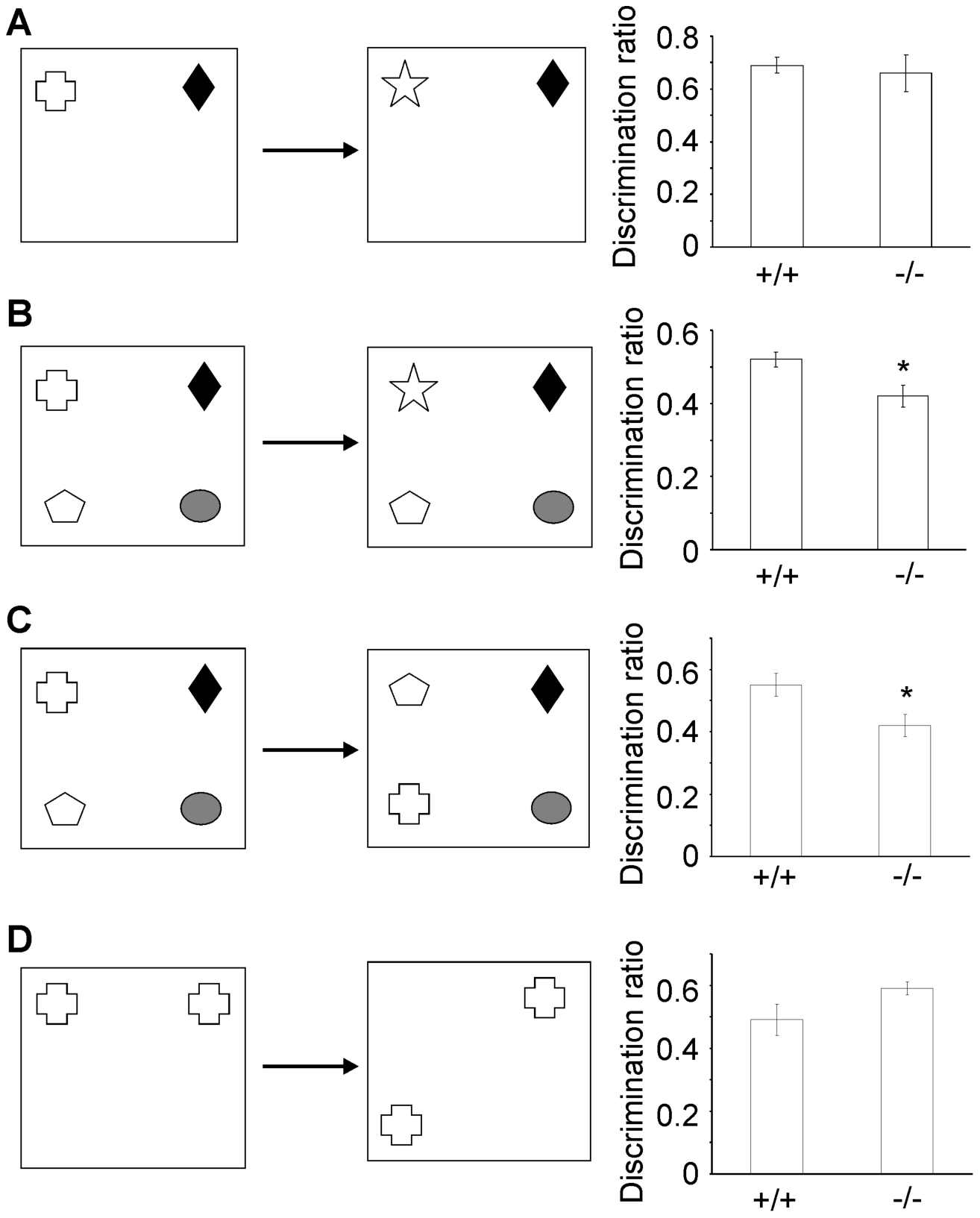 β-III spectrin knockout mice display deficits in some object recognition tasks.