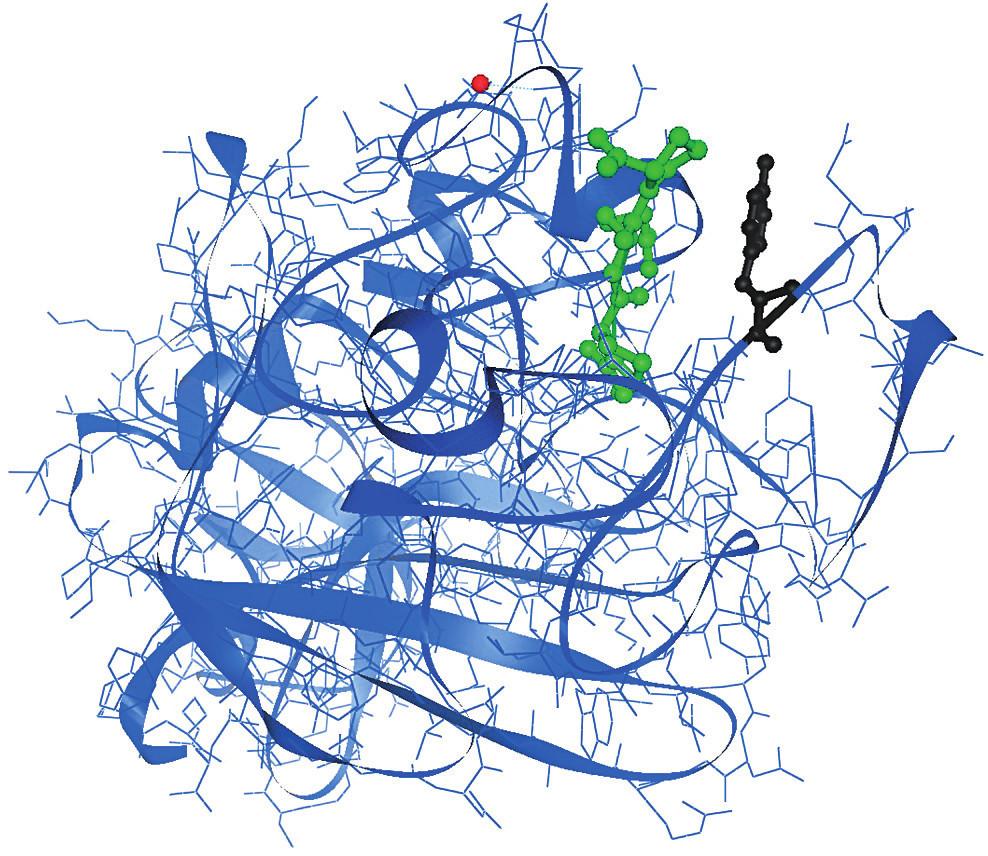 """Krystalografická struktura γC domény s GPRP peptidem navázaným v polymeračním místě """"a"""" γ Tyr363 (černě) je součástí polymerační prohlubně """"a"""" γC domény."""