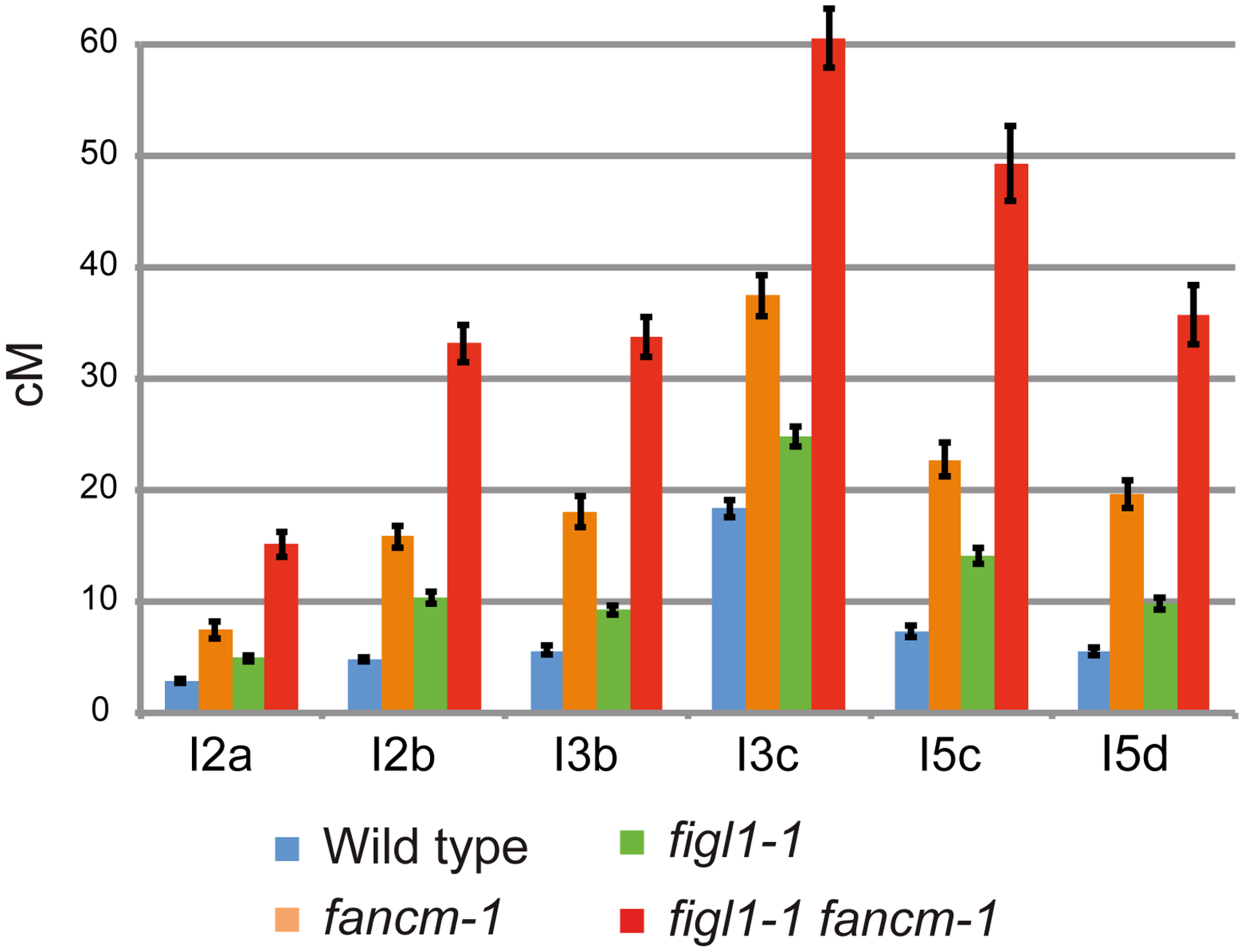 FIGL1 limits meiotic CO independently of FANCM.