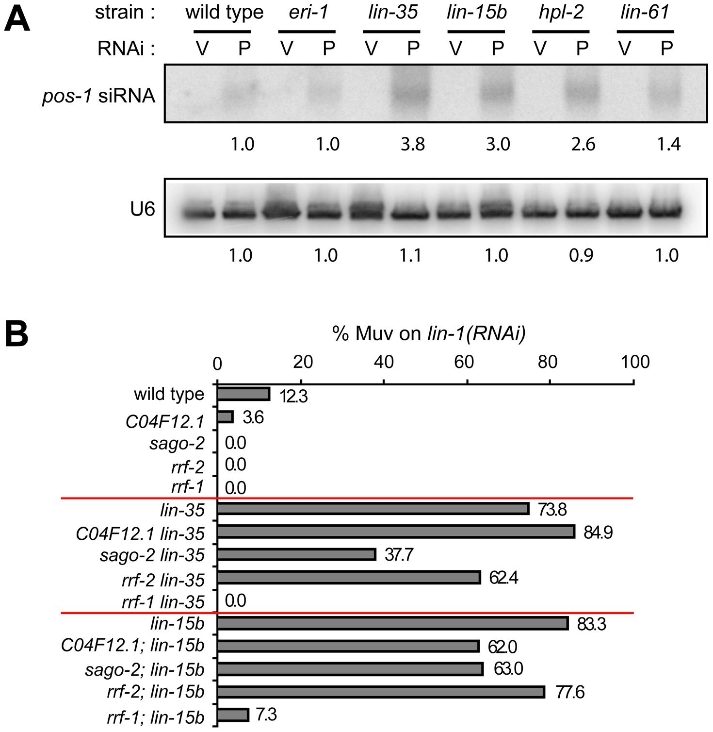 Transcriptional misregulations partially contribute to the enhanced RNAi response of synMuv B mutants.