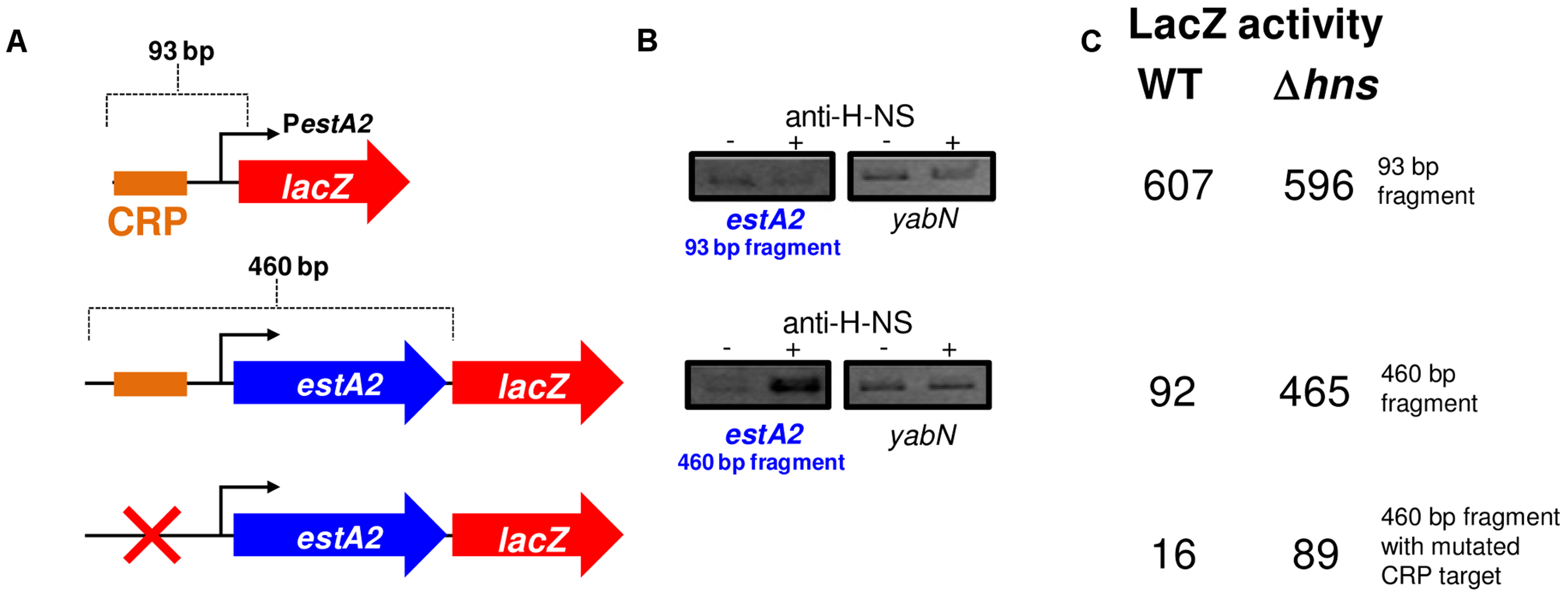 The <i>estA2</i> promoter is repressed by H-NS.