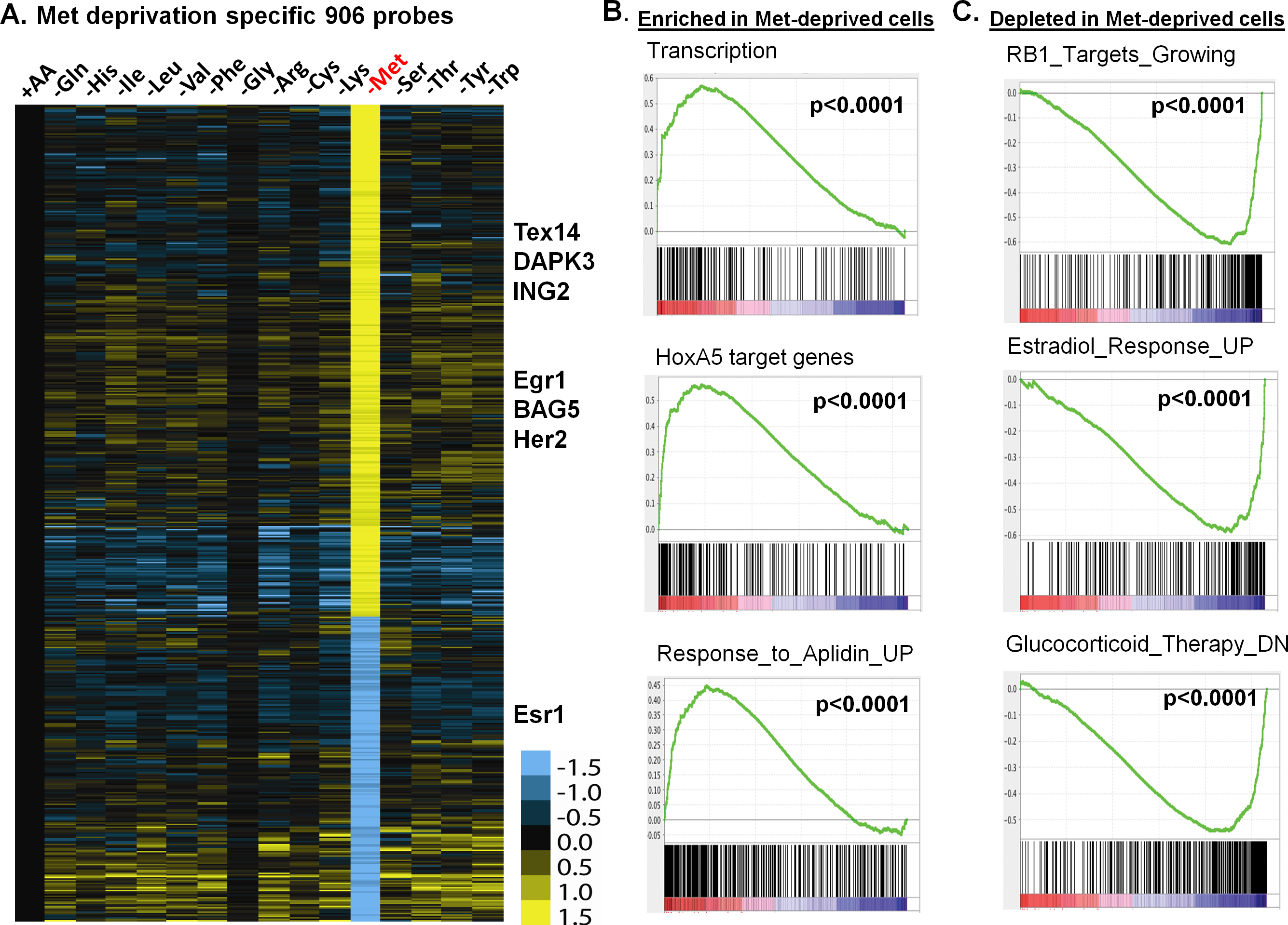 The methionine-deprived specific transcriptional response.