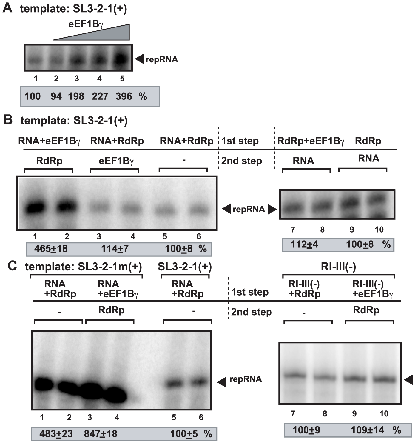 eEF1Bγ promotes minus-strand synthesis by the closely-related TCV RdRp.