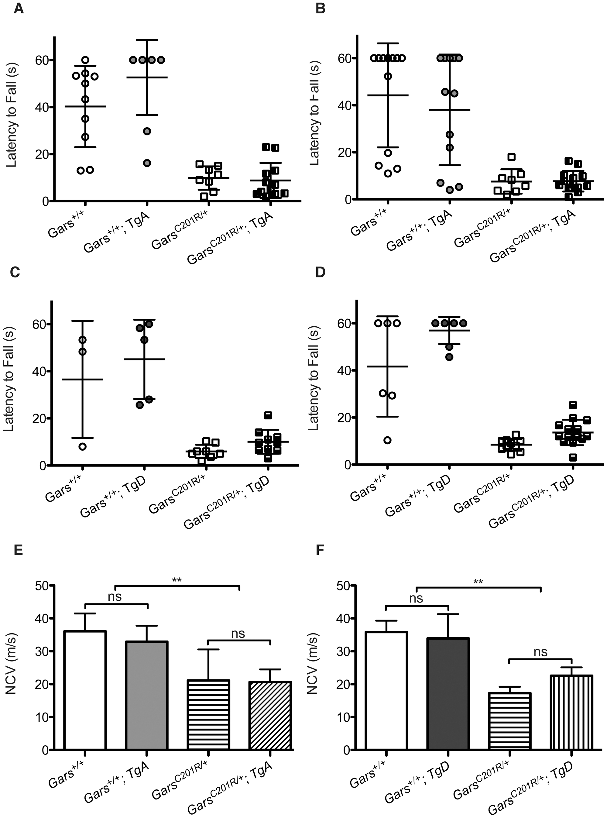 Wire hanging deficits in <i>C201R/+</i> mice are not improved by over-expression of <i>GARS</i>.